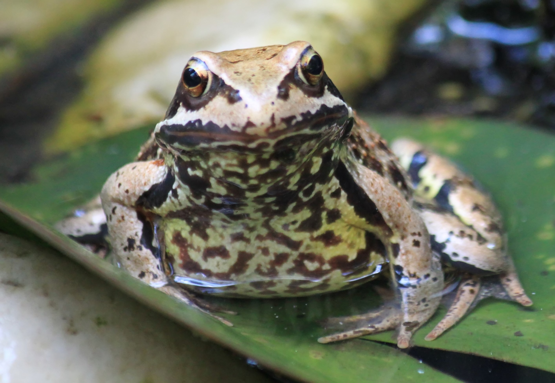 Frog, Animal, Jump, Reptile, Tiny, HQ Photo
