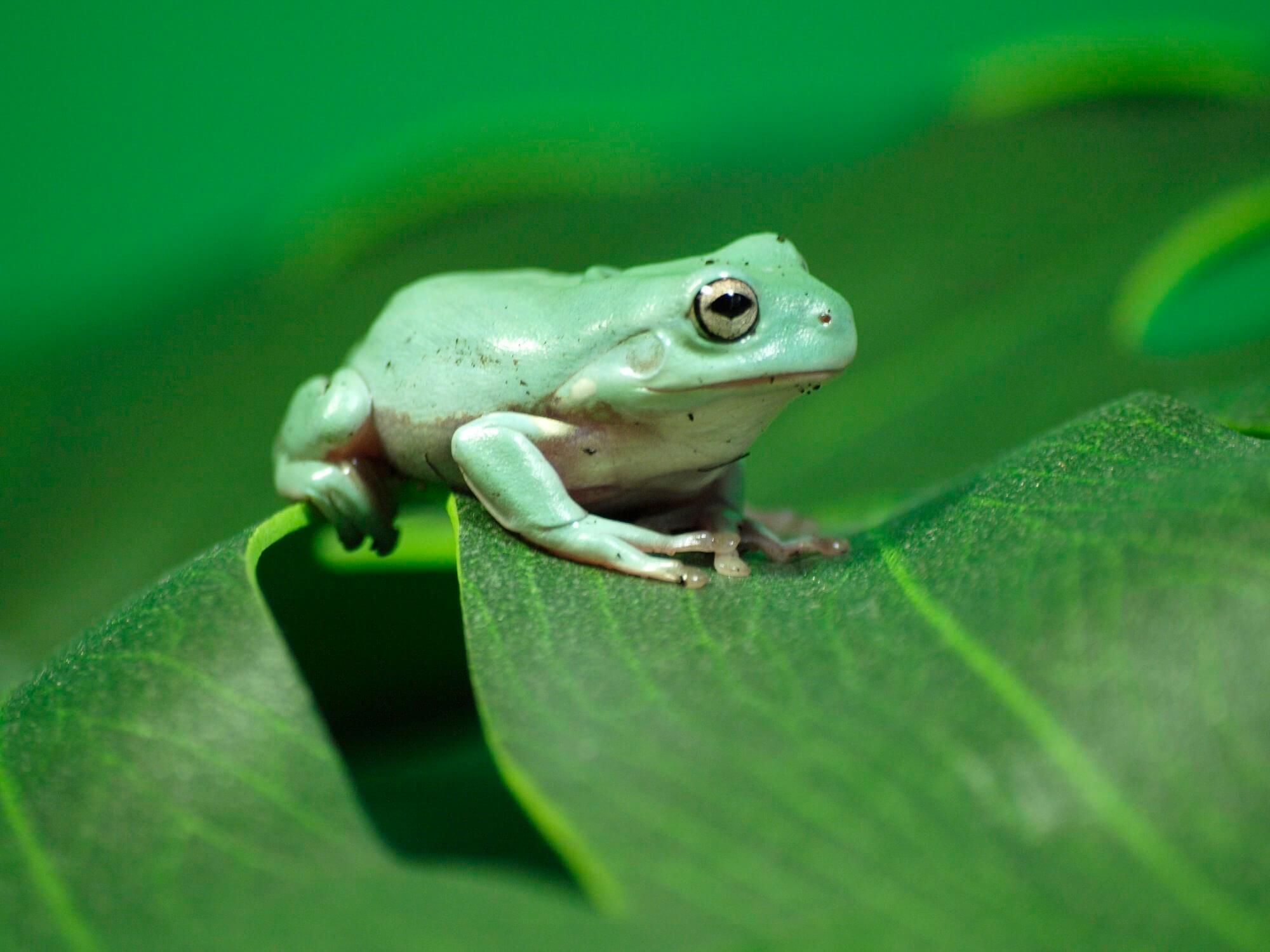 World Frog Day - March 20, 2018 | Happy Days 365