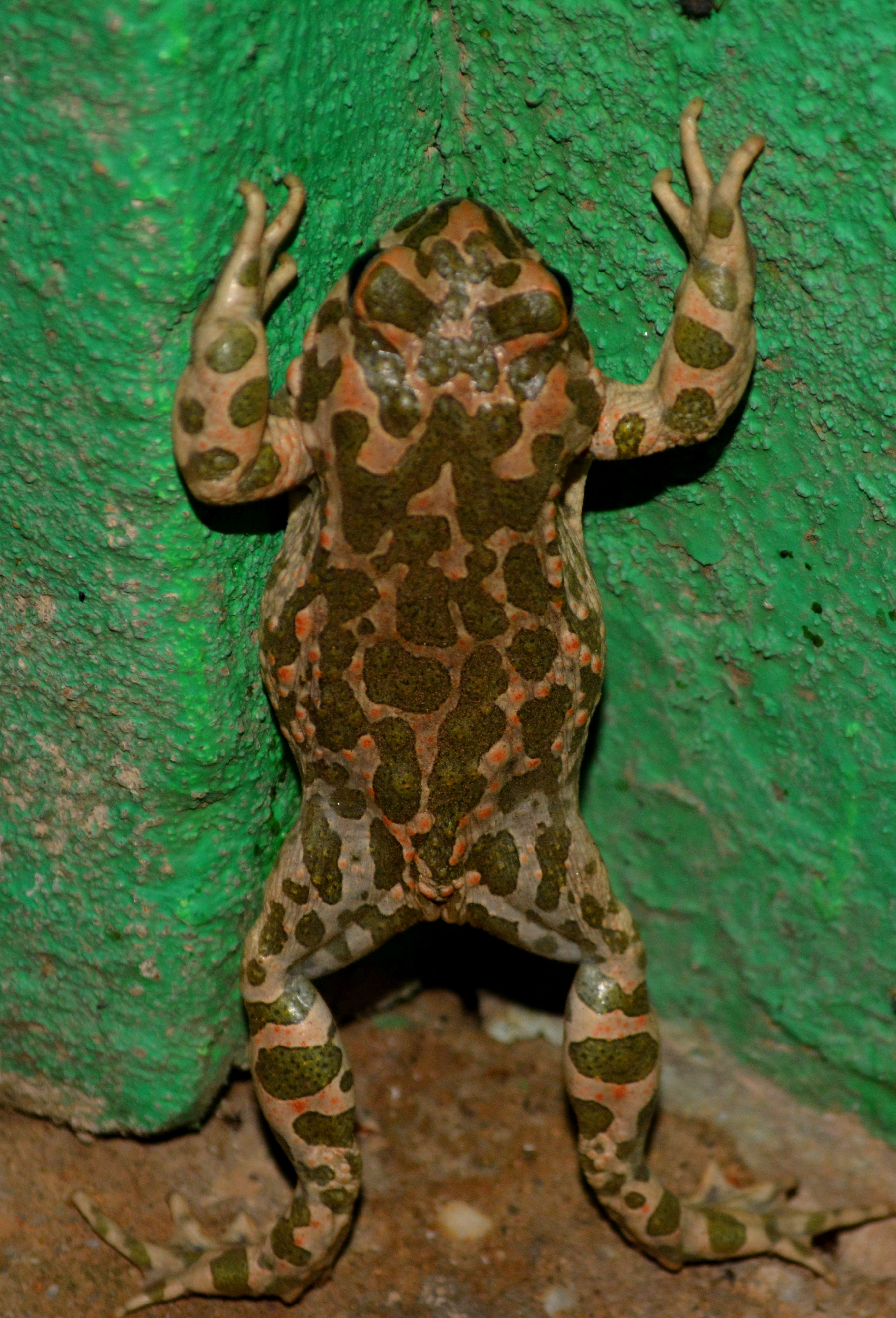 Frog, Animal, Green, Small, Wild, HQ Photo