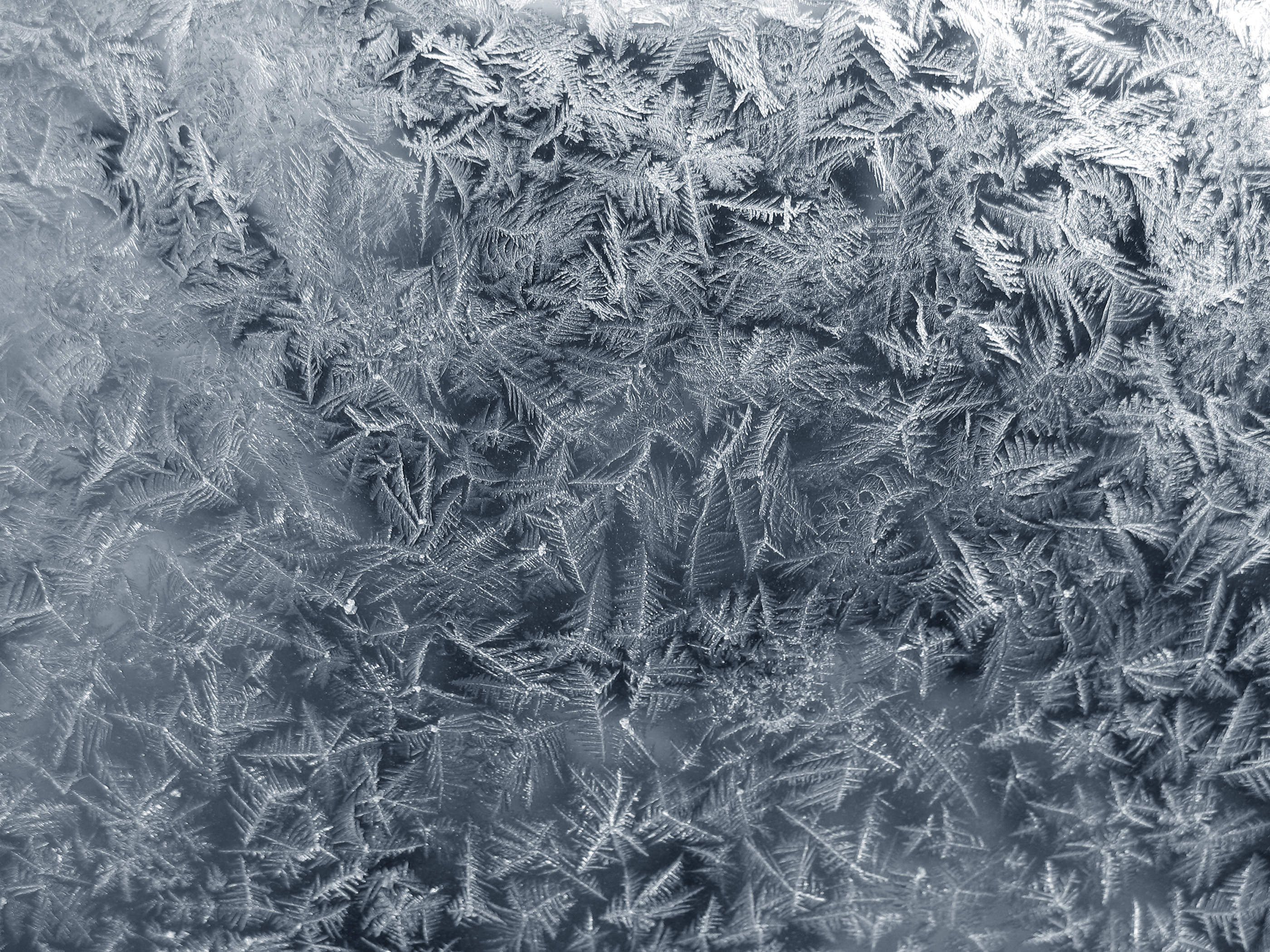 Frost texture photo