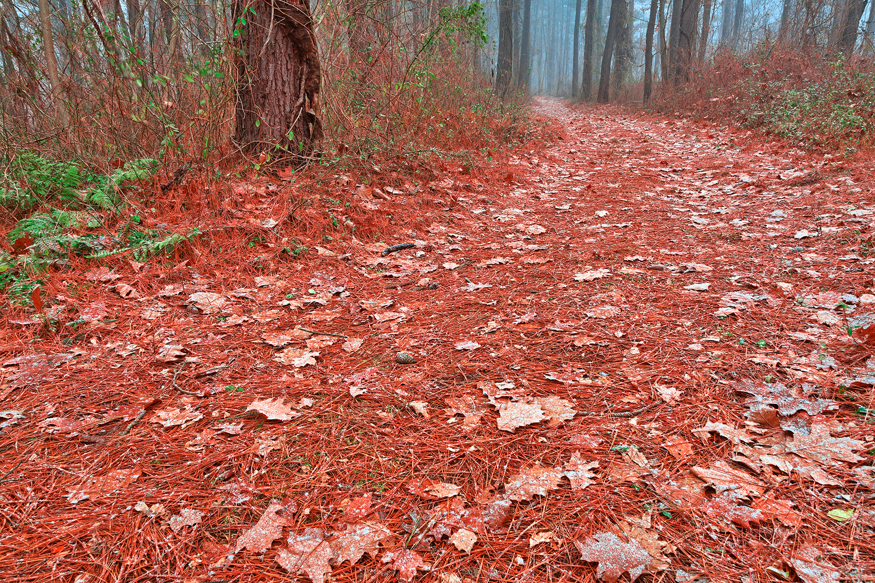 Frosty christmas trail - hdr photo