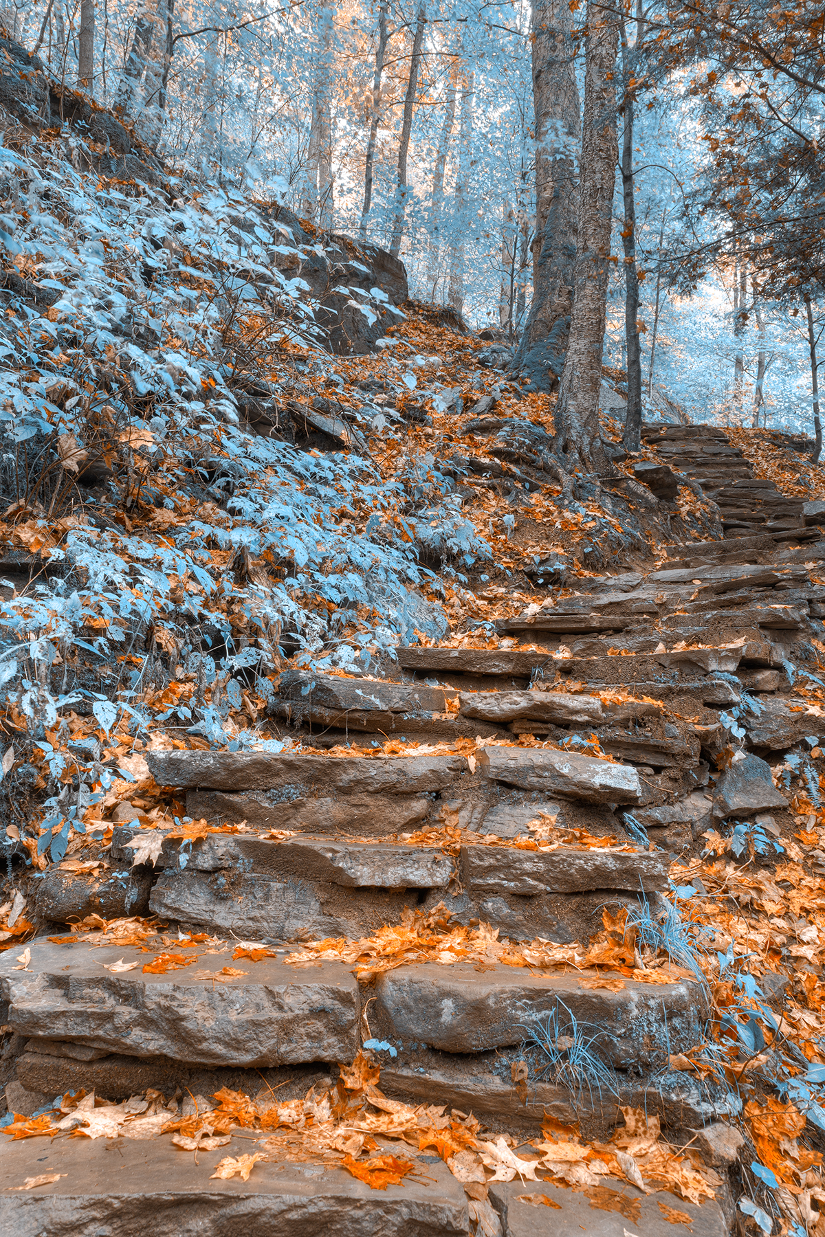 Frosty fall staircase - hdr photo