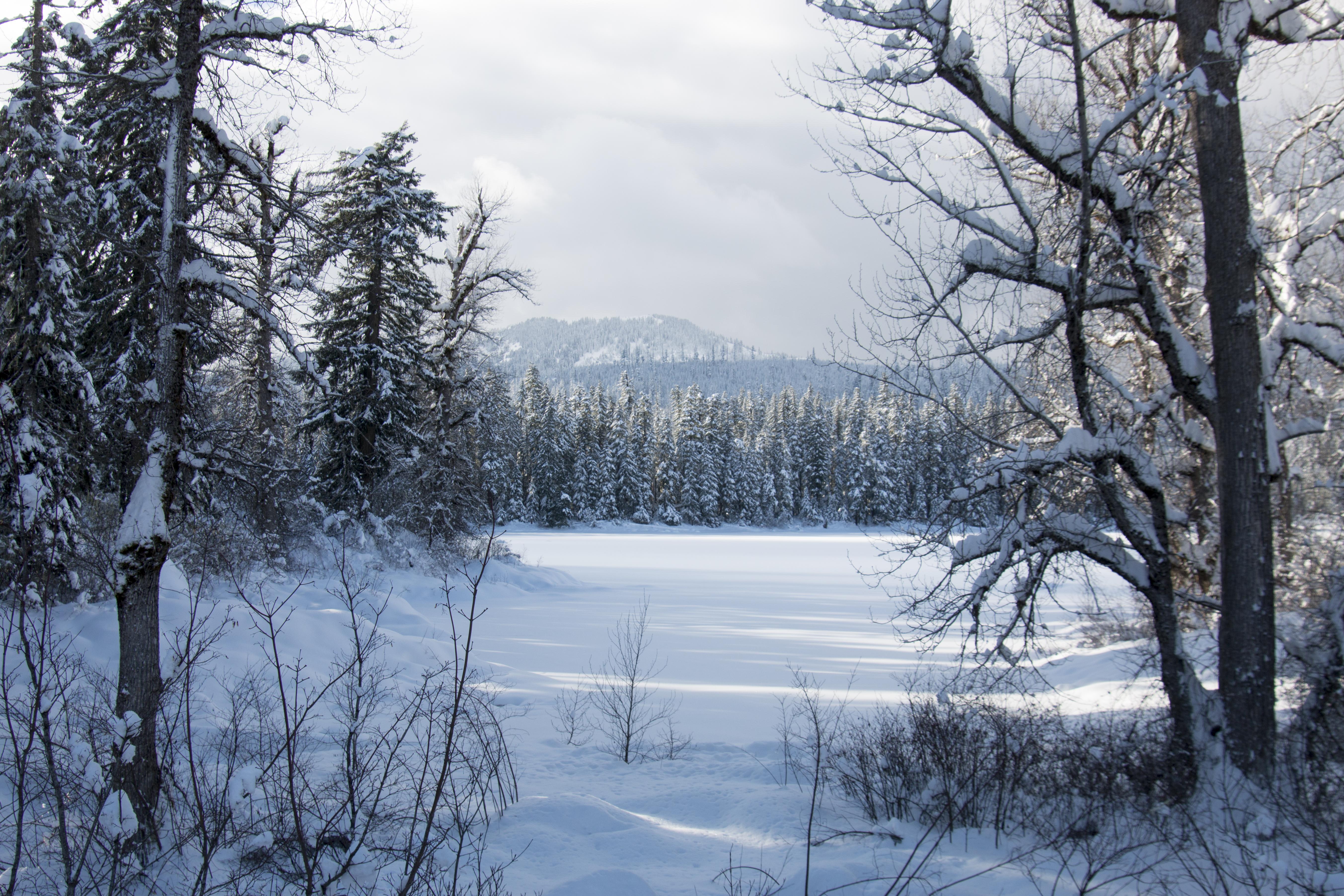 Frozen Clear Lake, Oregon, Clear Lake, Forest, Frozen, Lake, HQ Photo