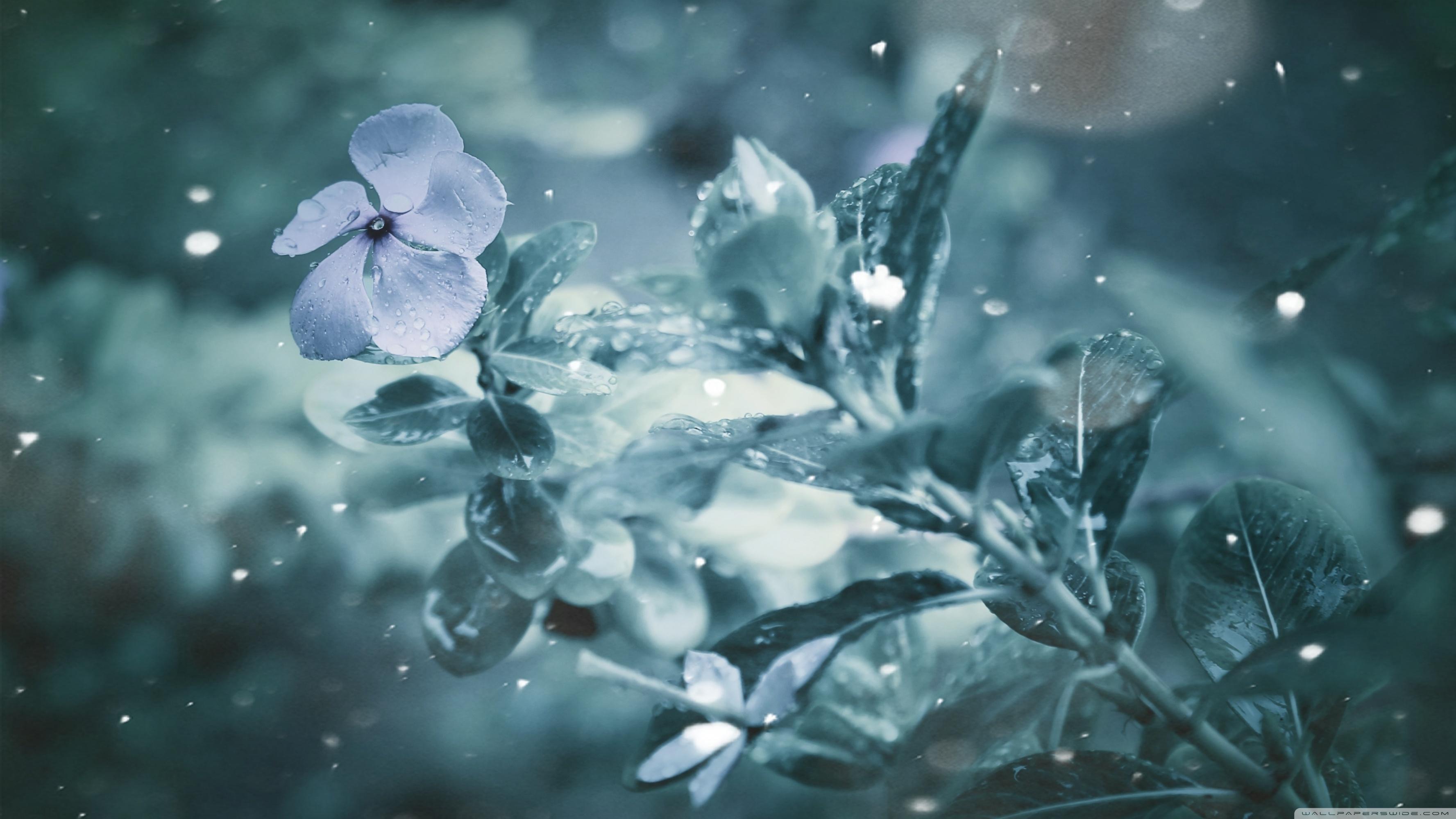 Frozen Flower ❤ 4K HD Desktop Wallpaper for 4K Ultra HD TV • Wide ...