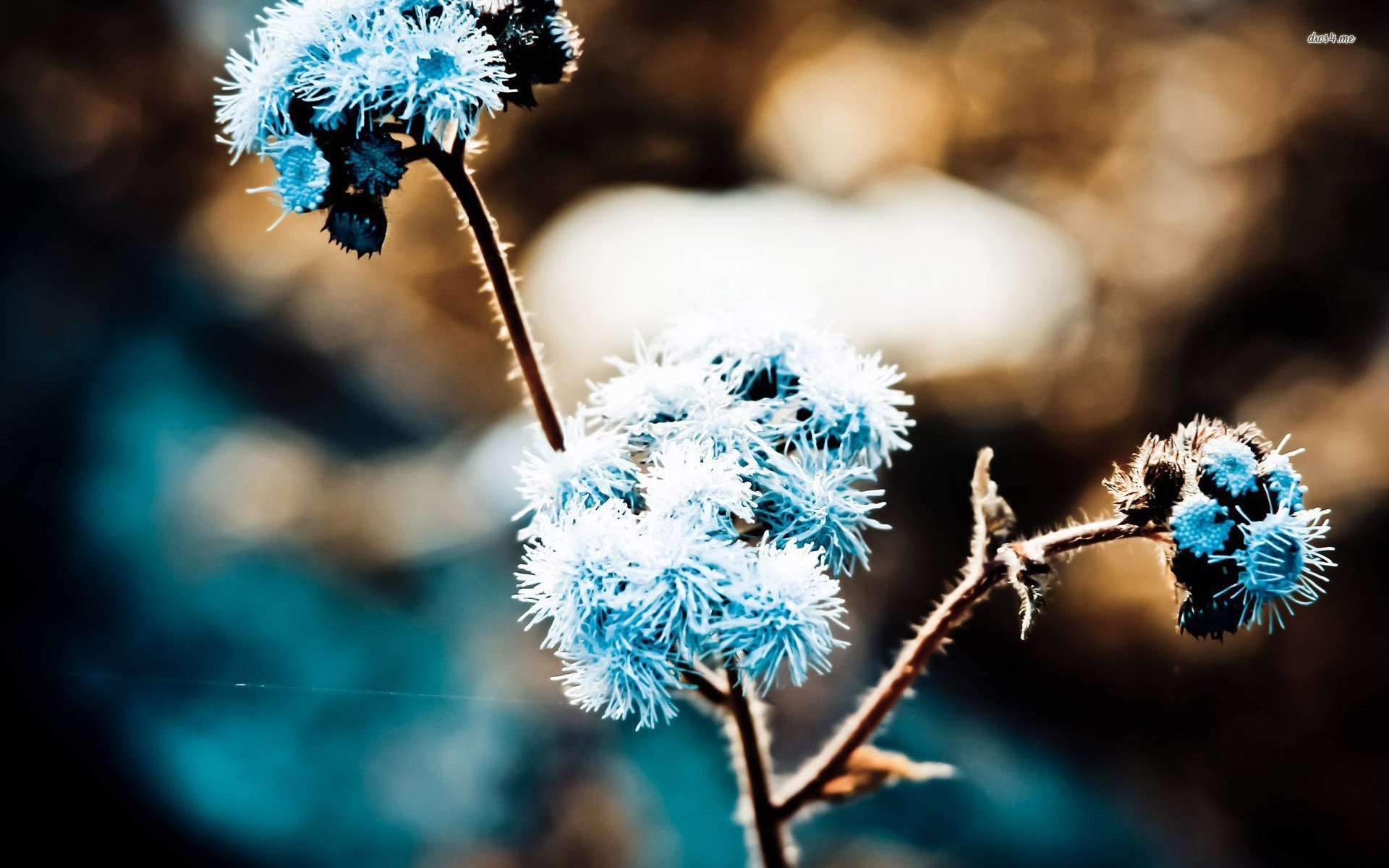 Frozen Flower - WallDevil