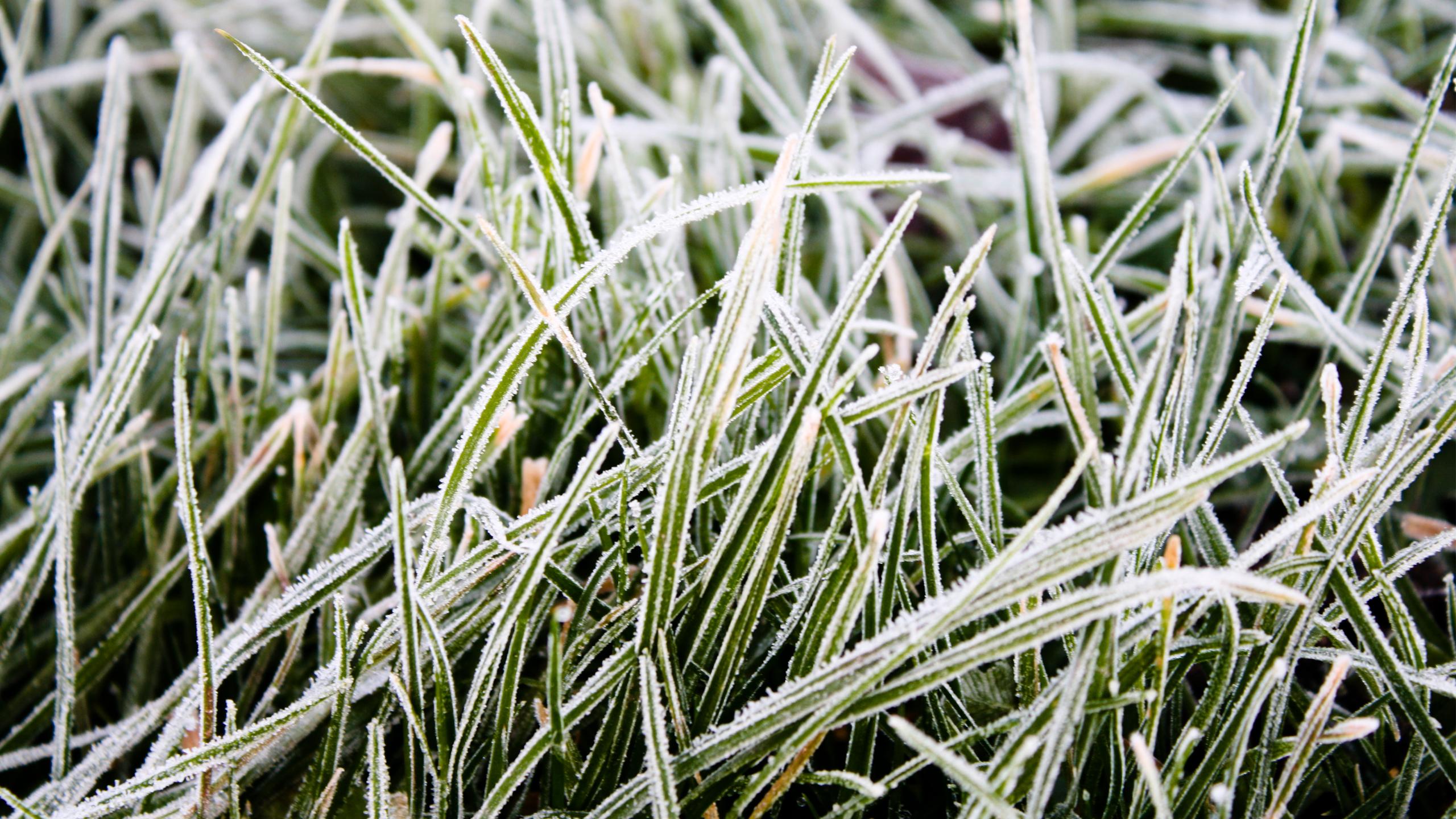 Frozen grass photo