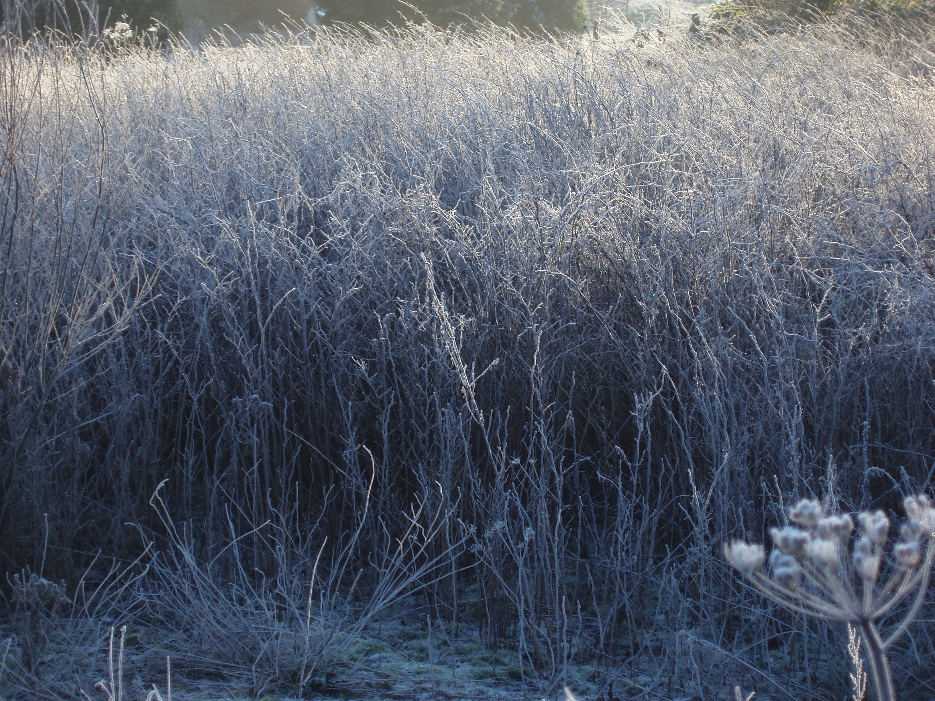 frosty meadow | Free backgrounds and textures | Cr103.com