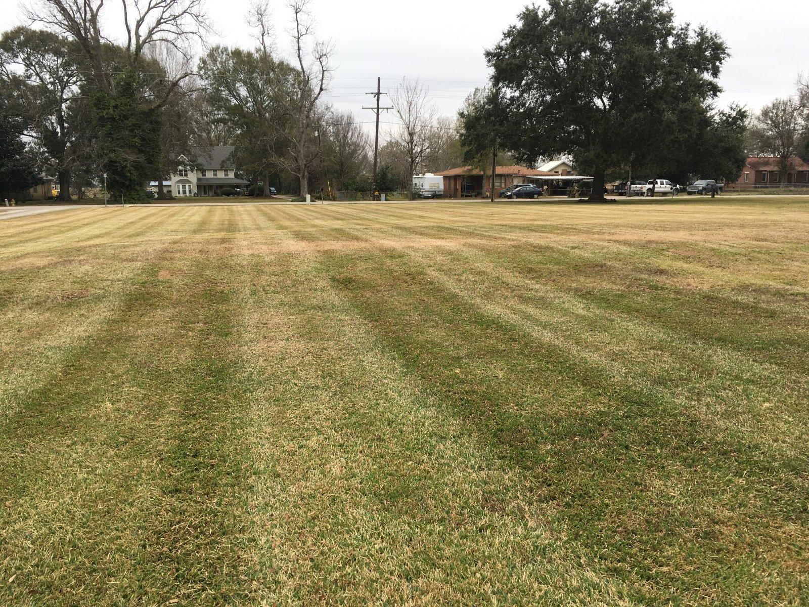 Dead frozen grass in the south   LawnSite