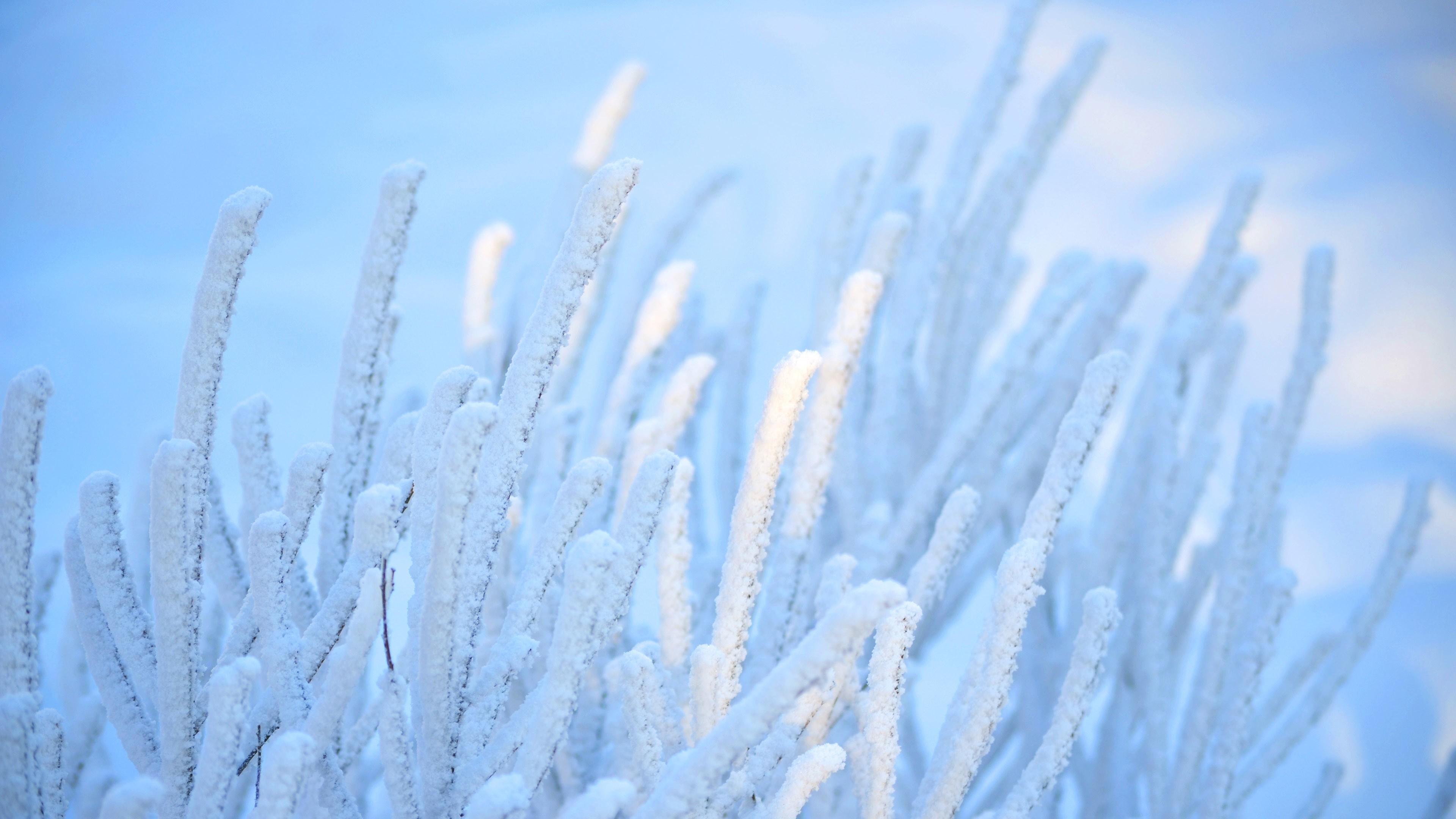 Nature: Frozen Grass Winter Ice Full HD Wallpaper 3840x2160 for HD ...