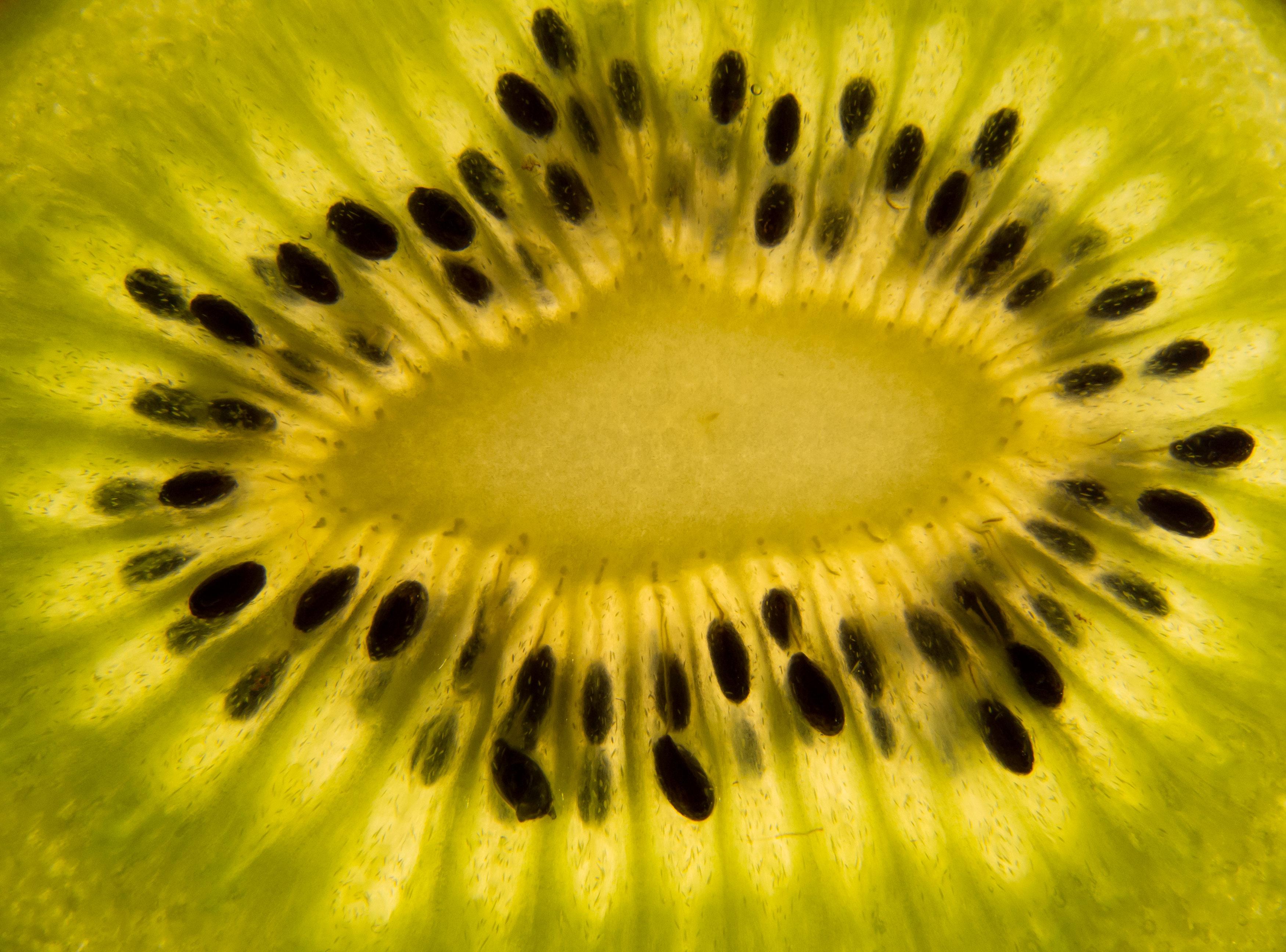 Kiwi slice macro photo