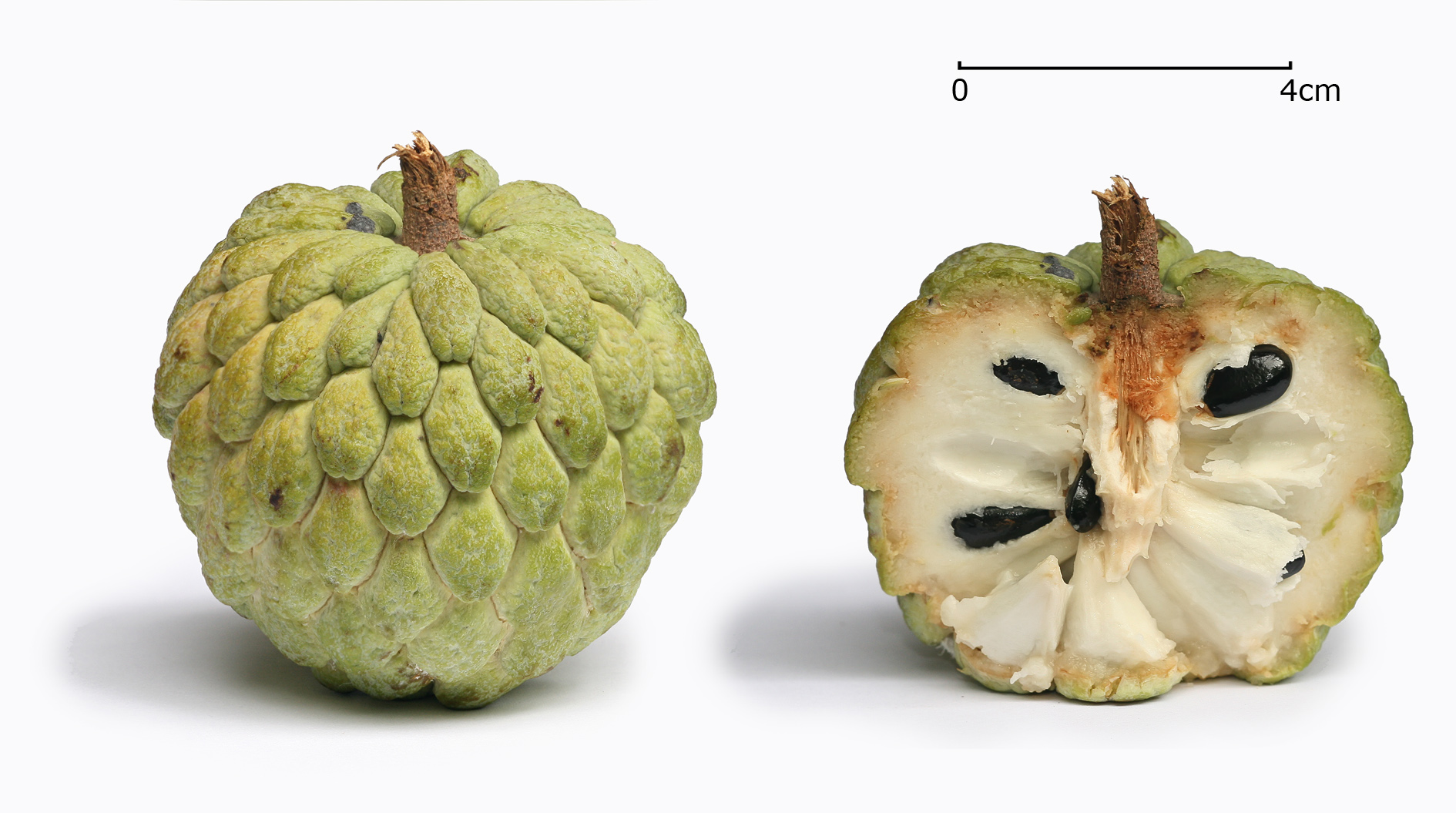Sugar apple photo