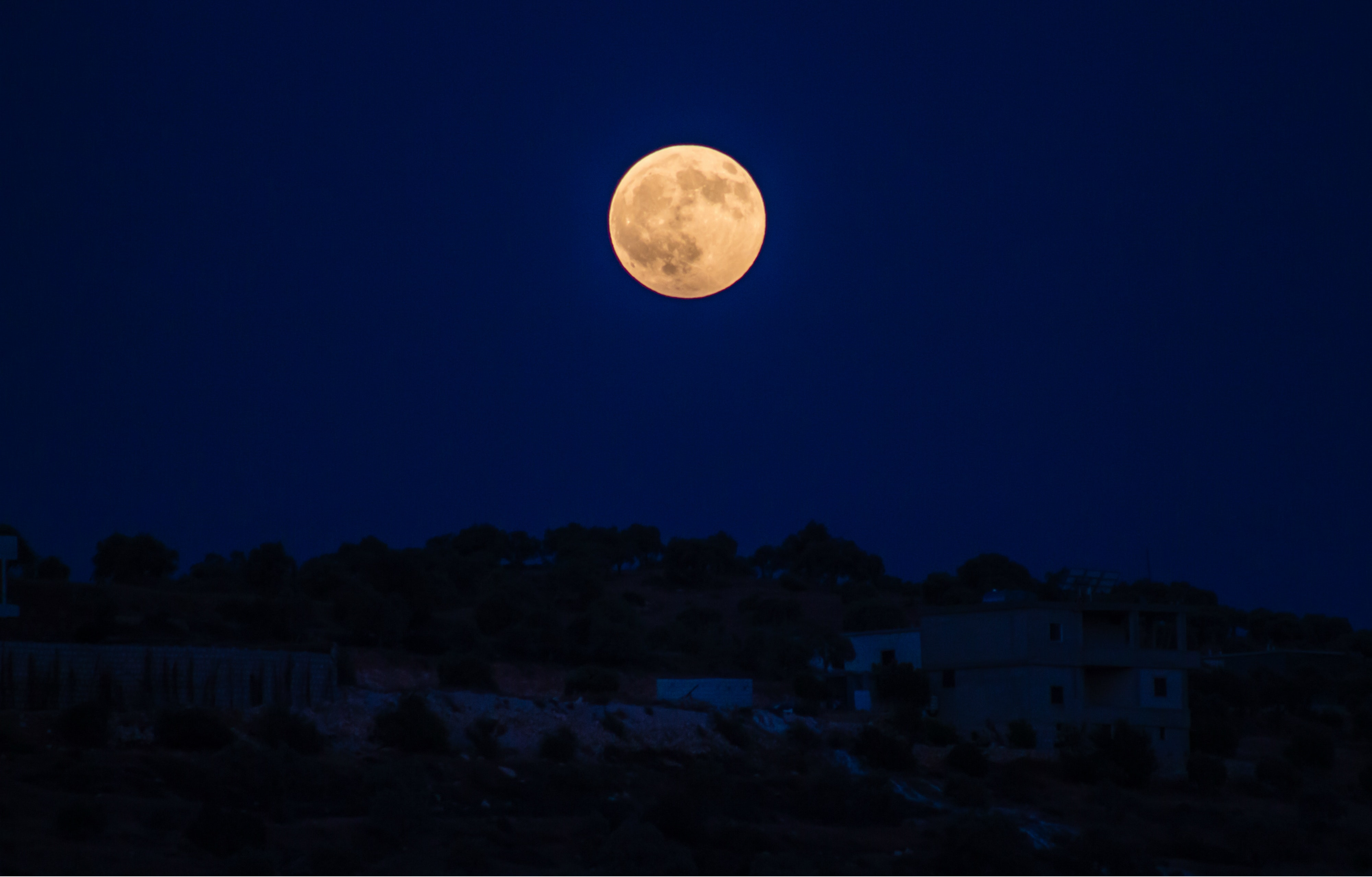 Full Moon, Luna, Trees, Sphere, Sky, HQ Photo