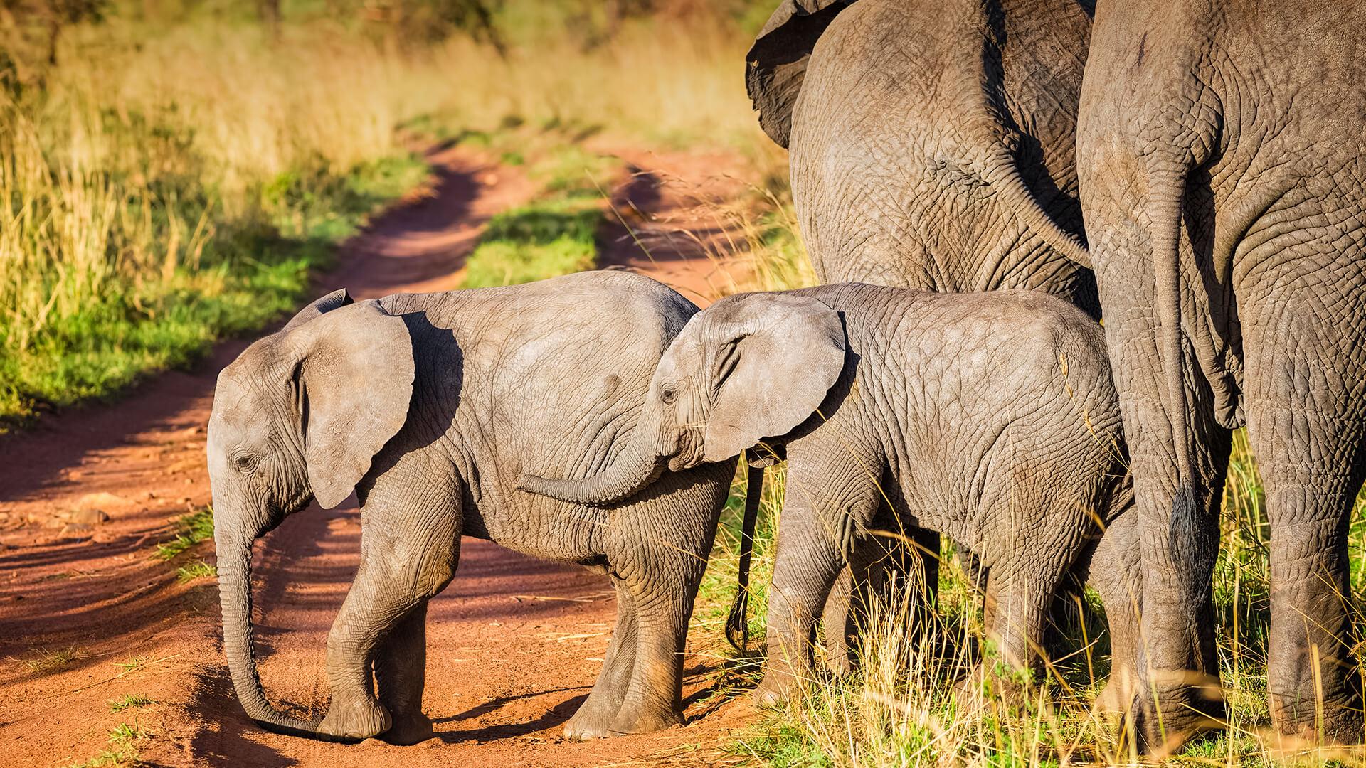 Elephant   San Diego Zoo Animals & Plants