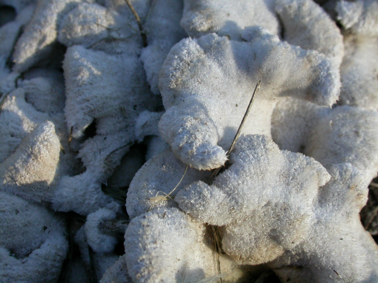 Fungus, Abstract, Furry, Plant, White, HQ Photo