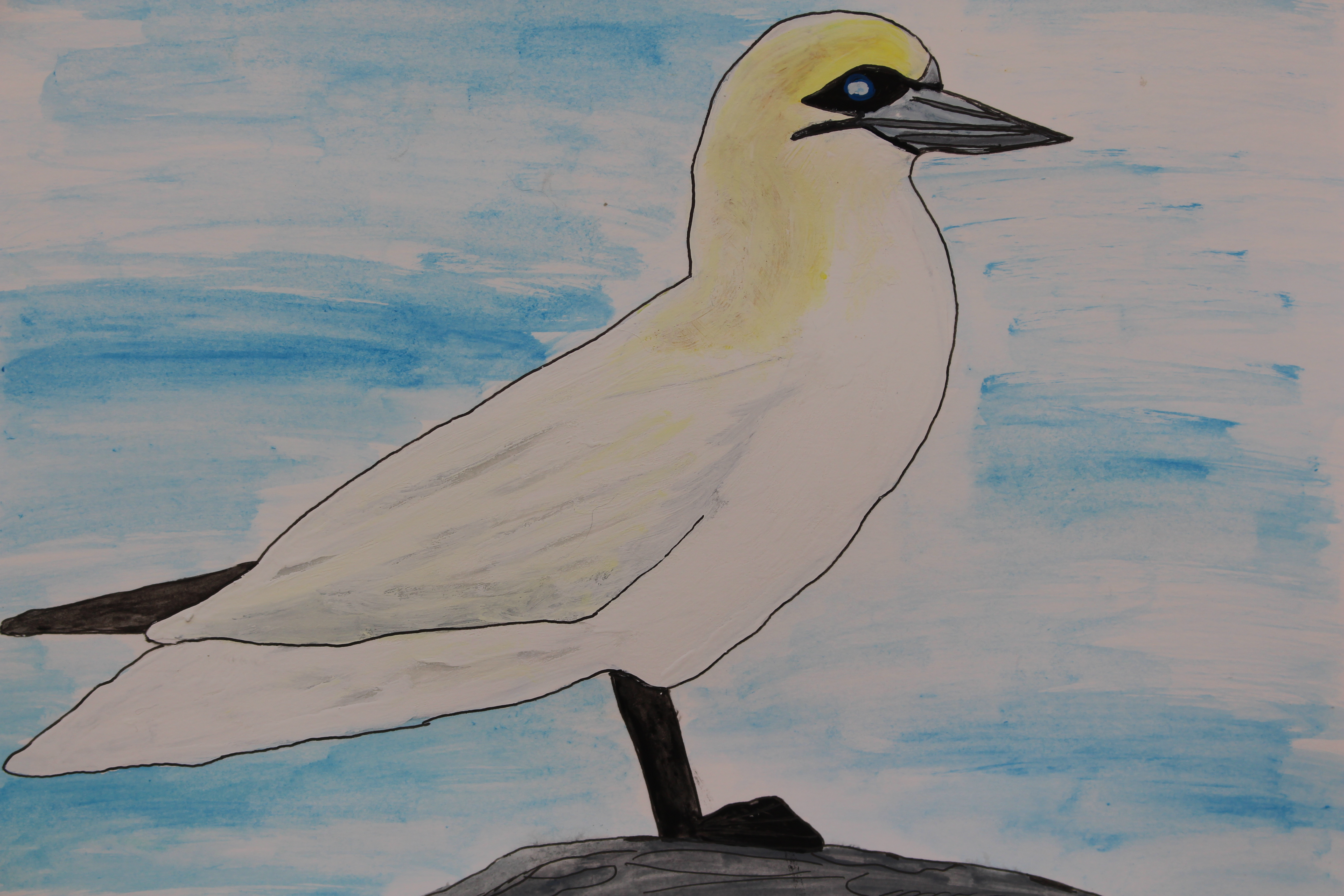 What is a Gannet?   Oceans Project, Bringing the Ocean Alive for ...