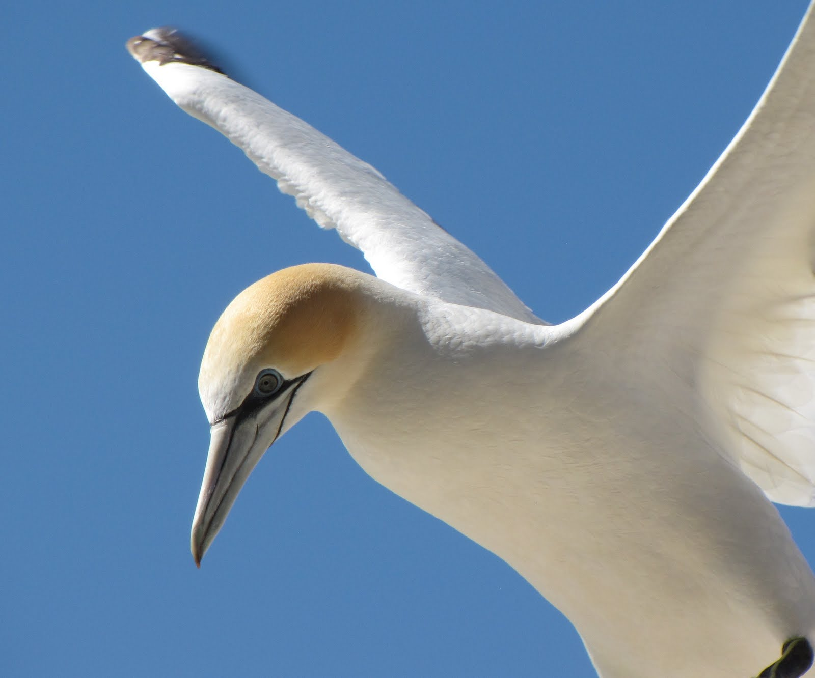 Holes in My Soles: MY Land : Gannet Colony Cape Kidnappers.