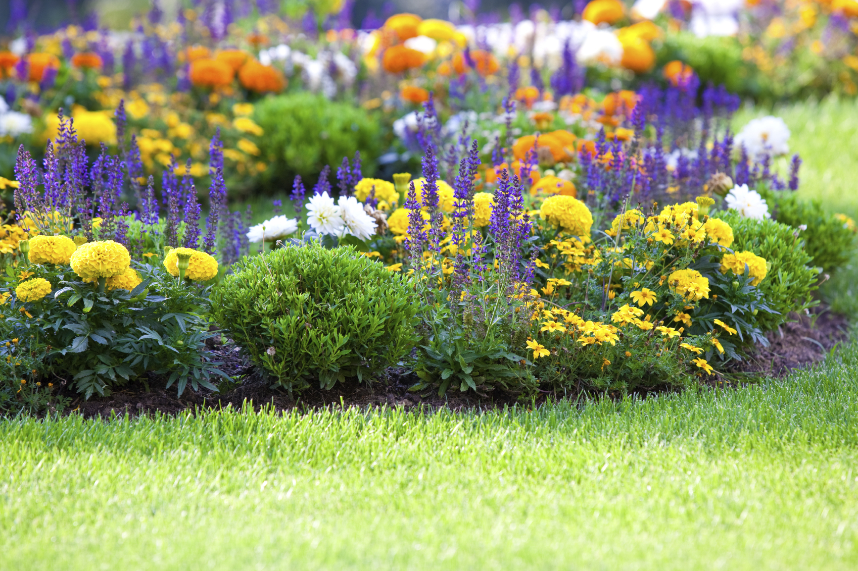 Free Photo Flower Garden Flower Garden Petals Free Download