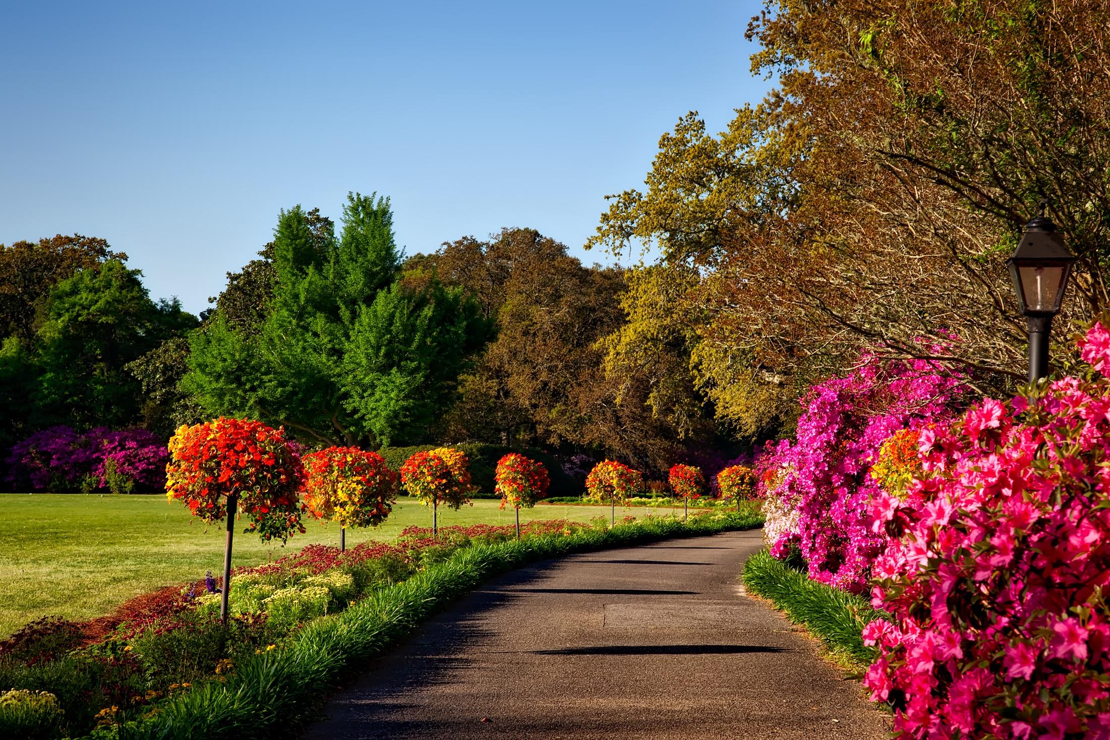 Free photo: Garden - nature, freshness, fresh - Creative Commons ...