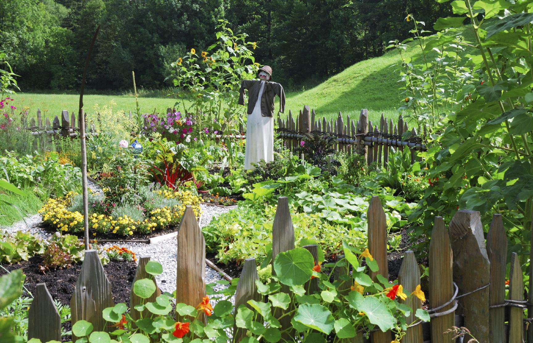 Free Photo Vegetable Garden Garden Grow Growing Free