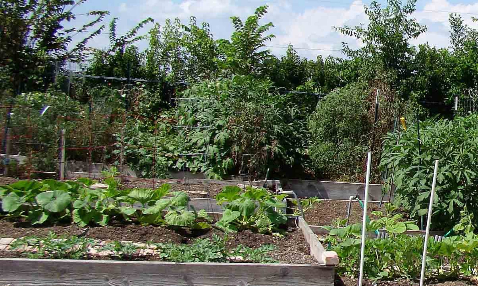 Gardens - Lake Highlands Community Garden