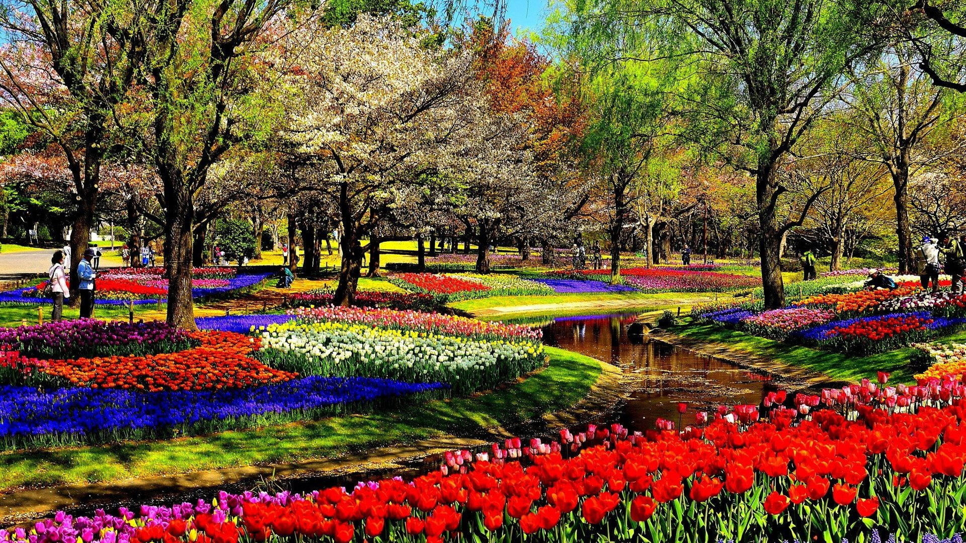 Free photo: Garden of Flowers - Nature, Tulip, Garden - Free ...