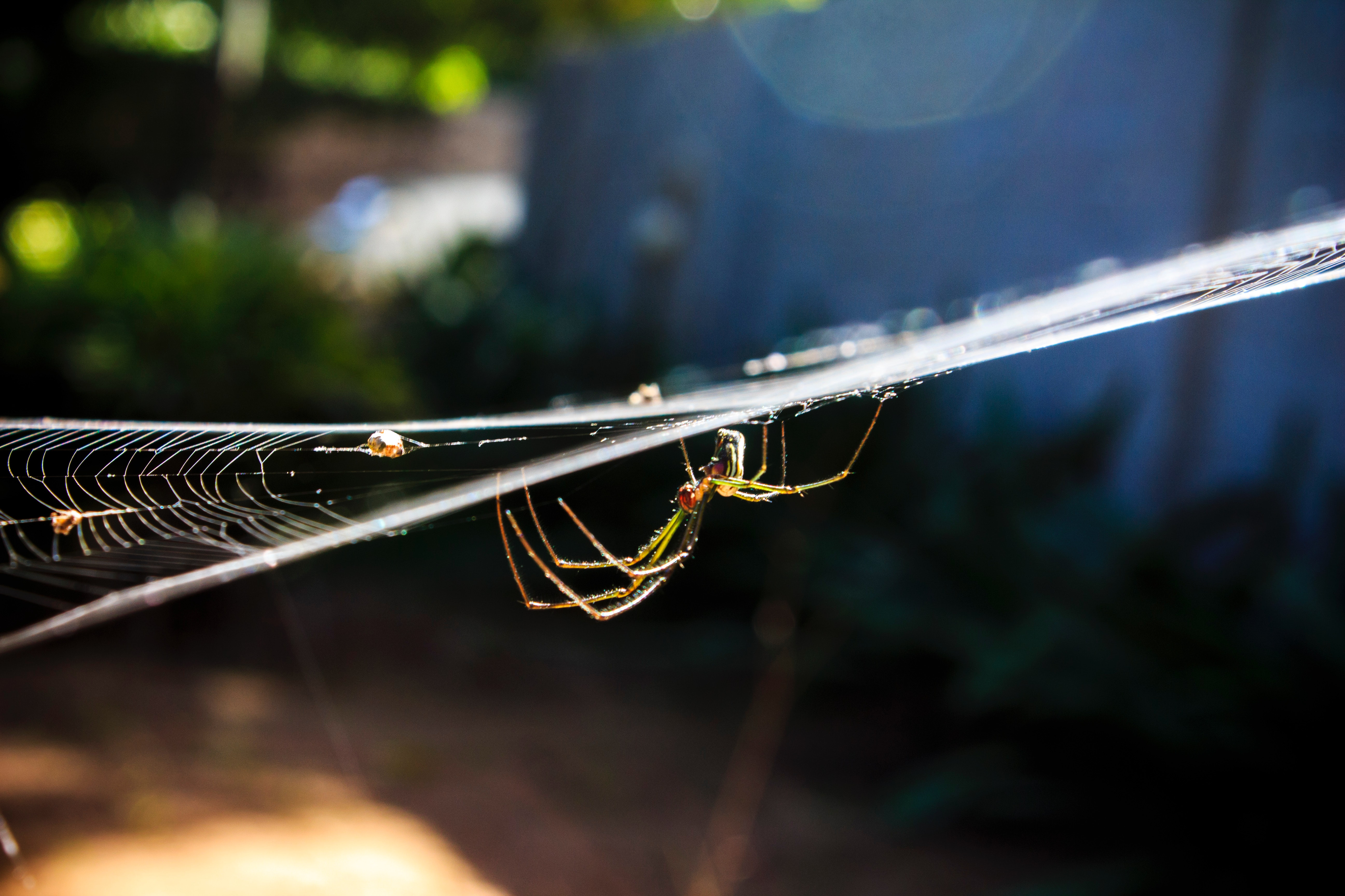 Garden Spider on Web in Close-up Photography, Animal, Macro photography, Web, Trap, HQ Photo