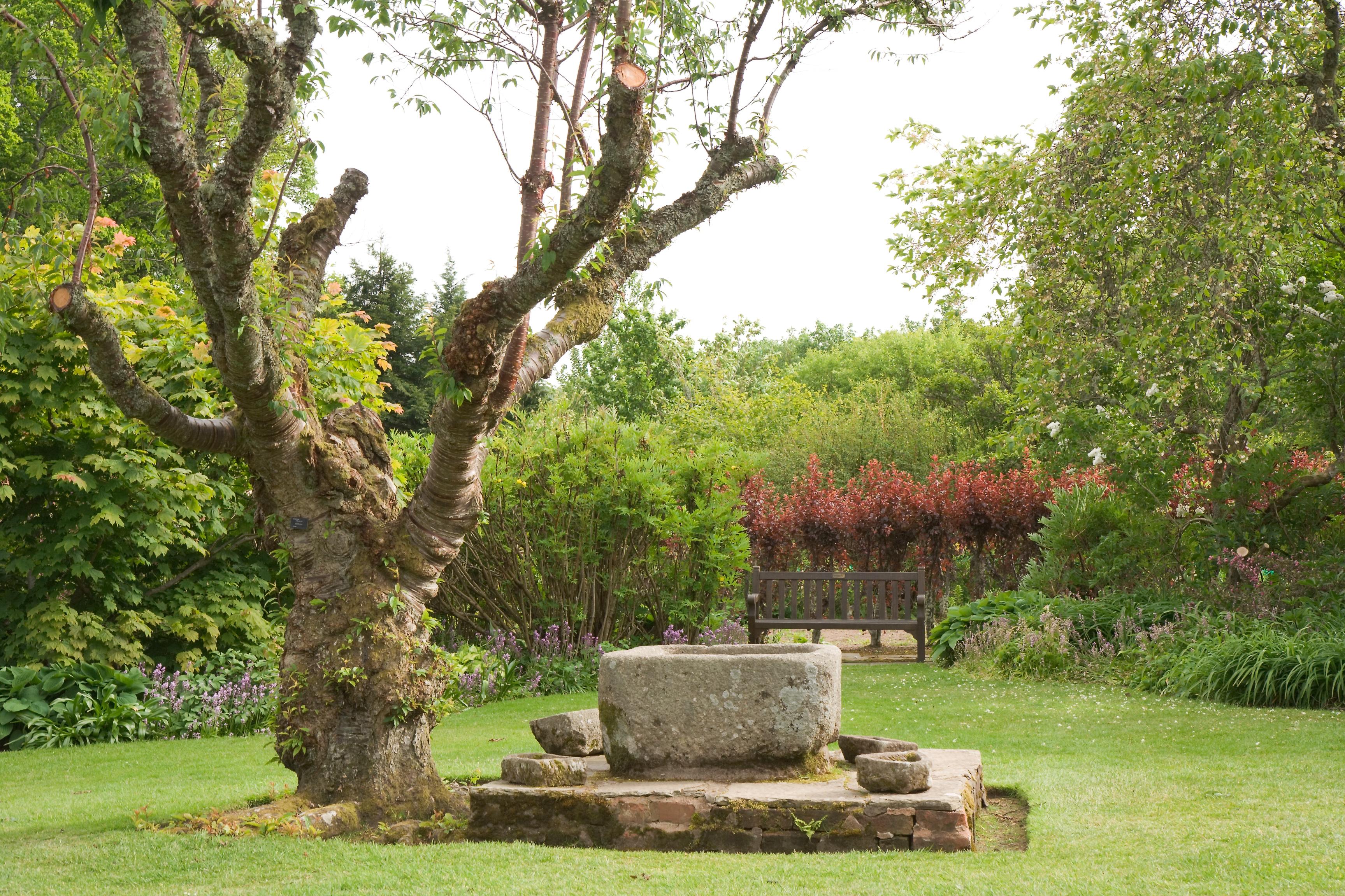 File:Crathes Castle garden tree.jpg - Wikimedia Commons