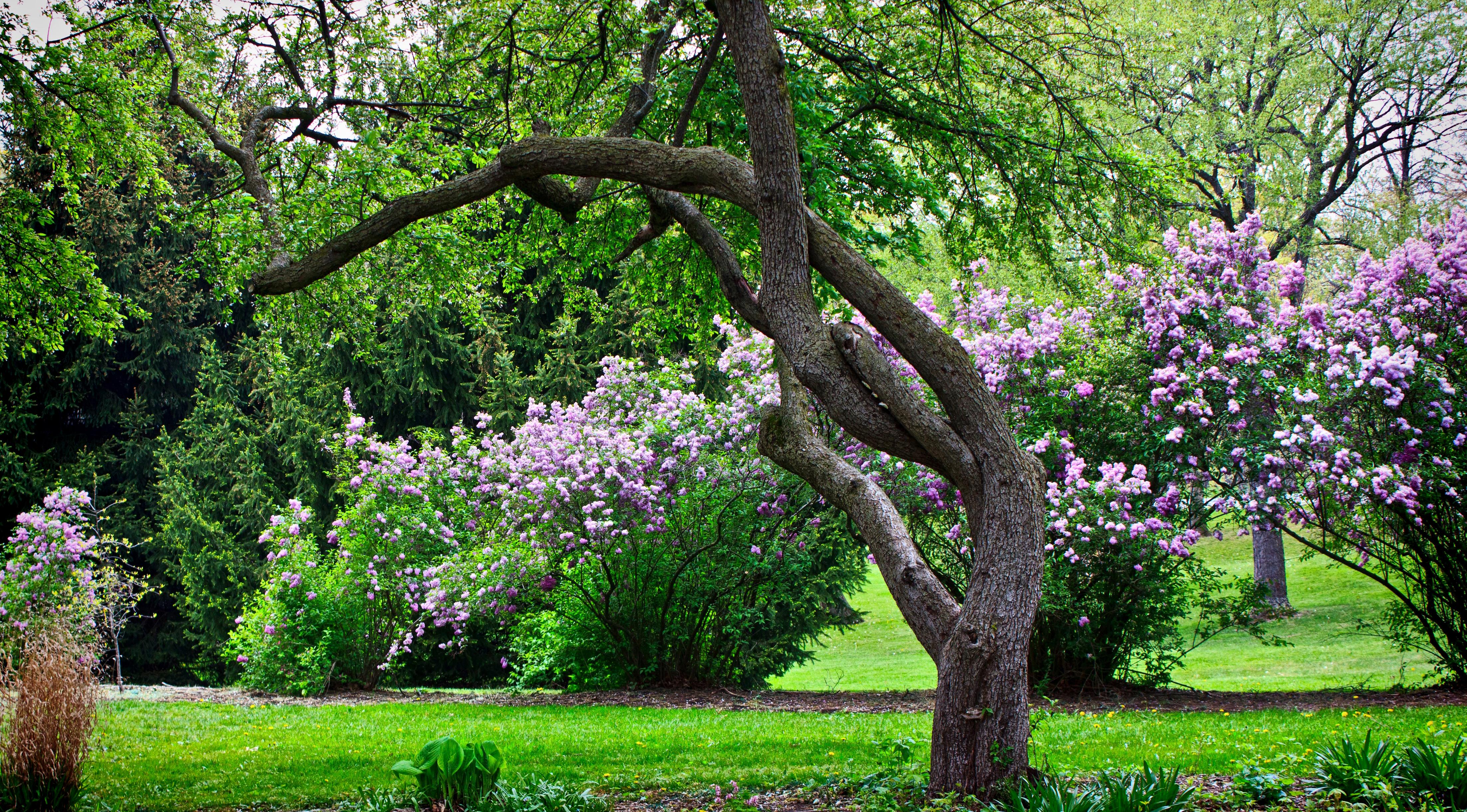 Gnarled Garden Tree   Edward Byrne