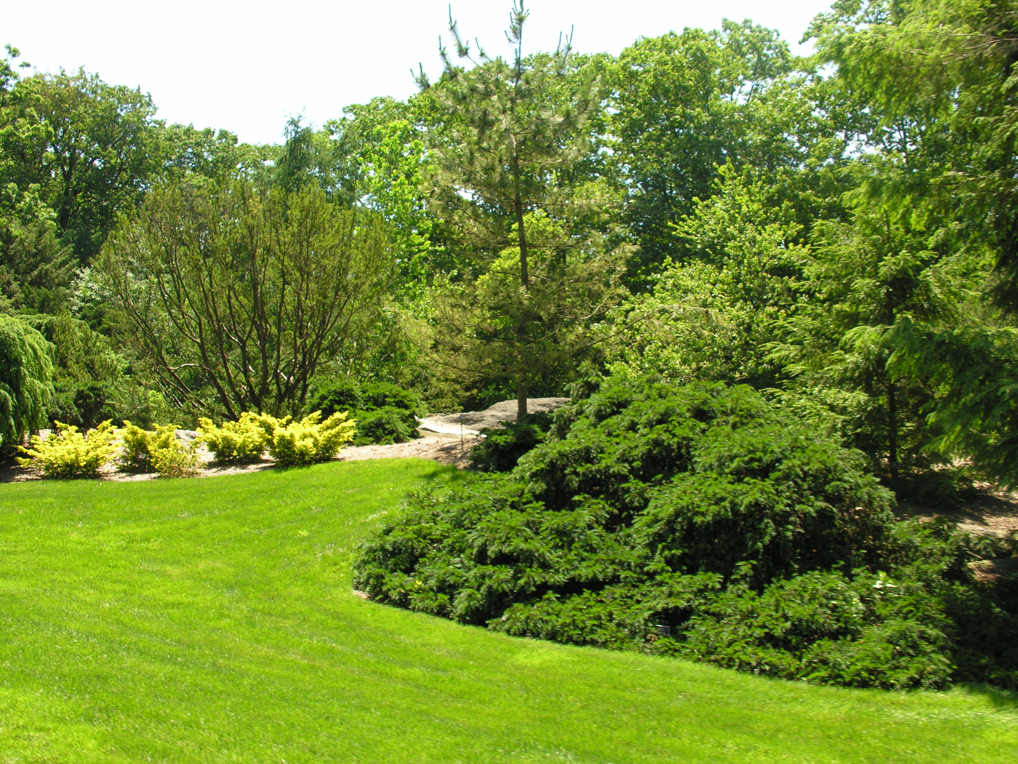 The New York Botanical Garden IV: Trees   Digging RI