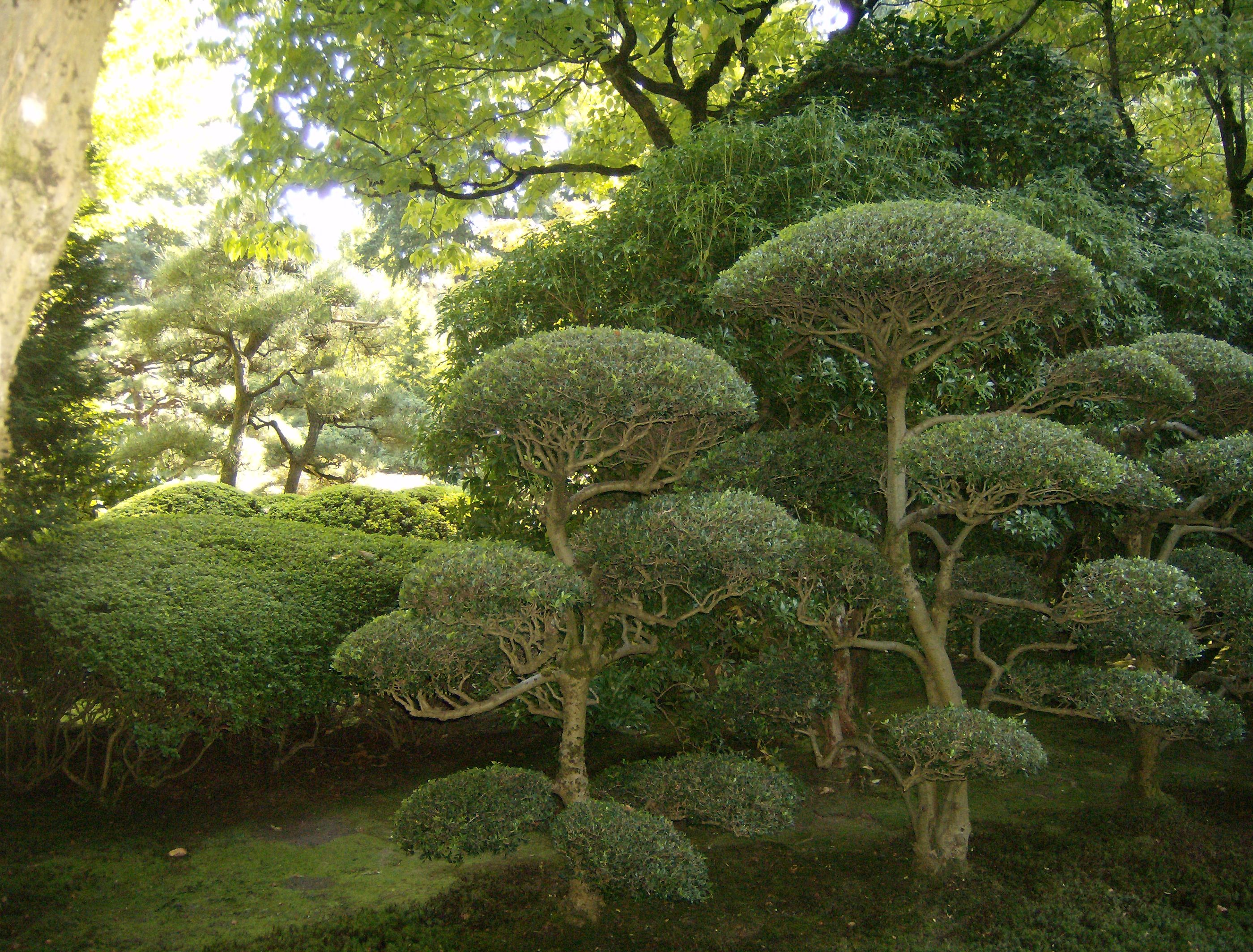 Japanese Garden in Portland, Oregon ... Carefully pruned, not a leaf ...