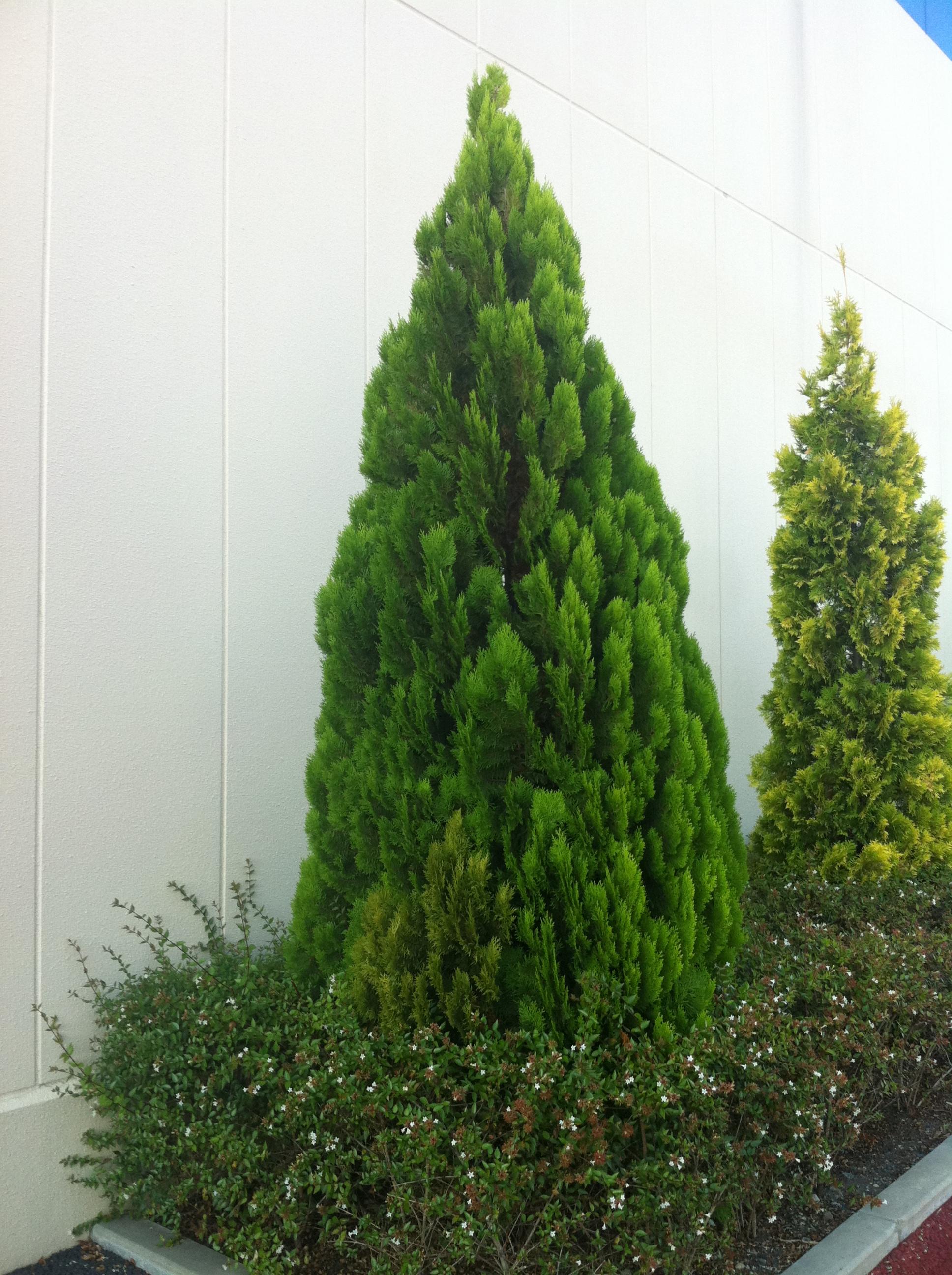 Garden Tree, Garden, Japanese, Tree, HQ Photo