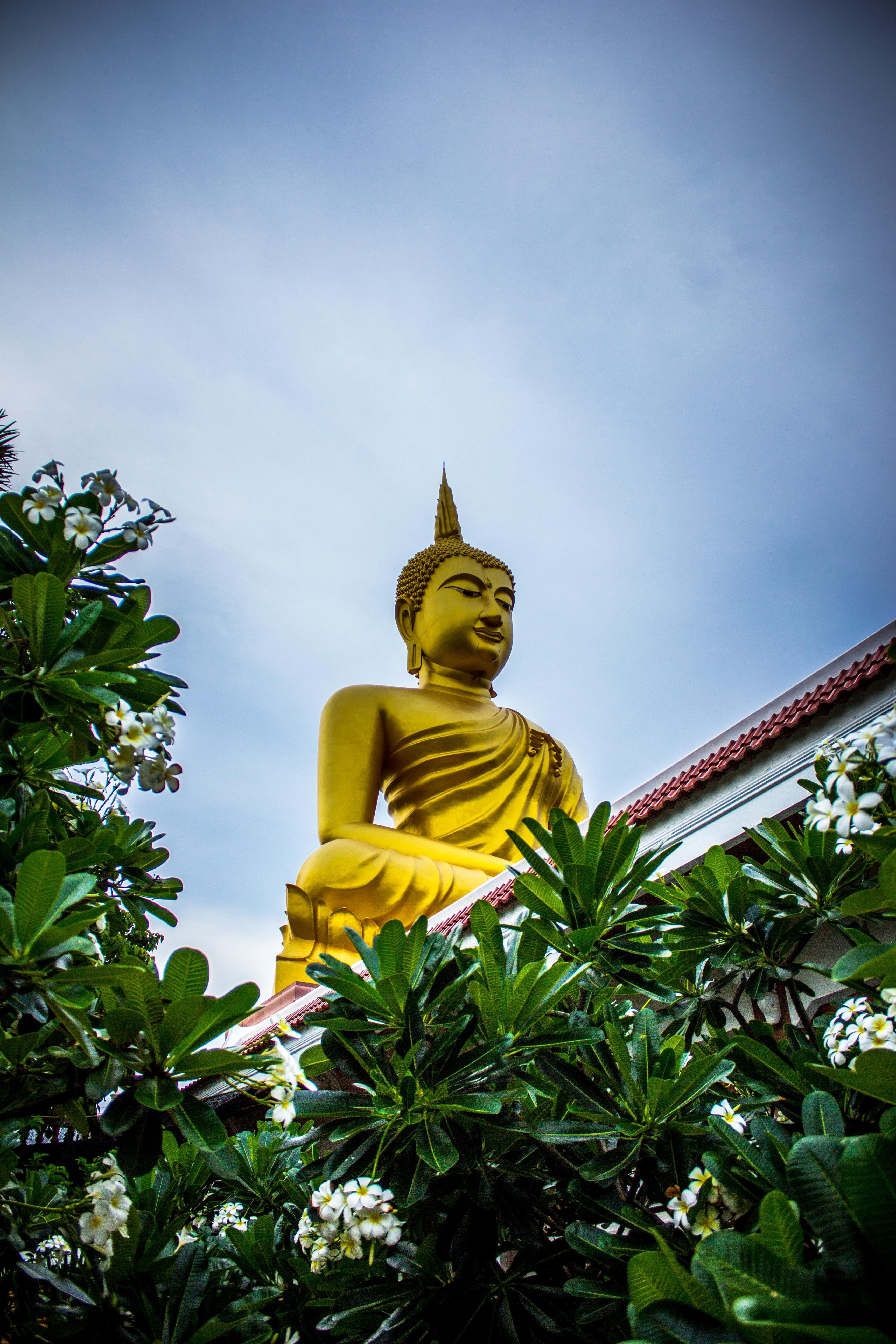 Gautama buddha statue near green leaves photo