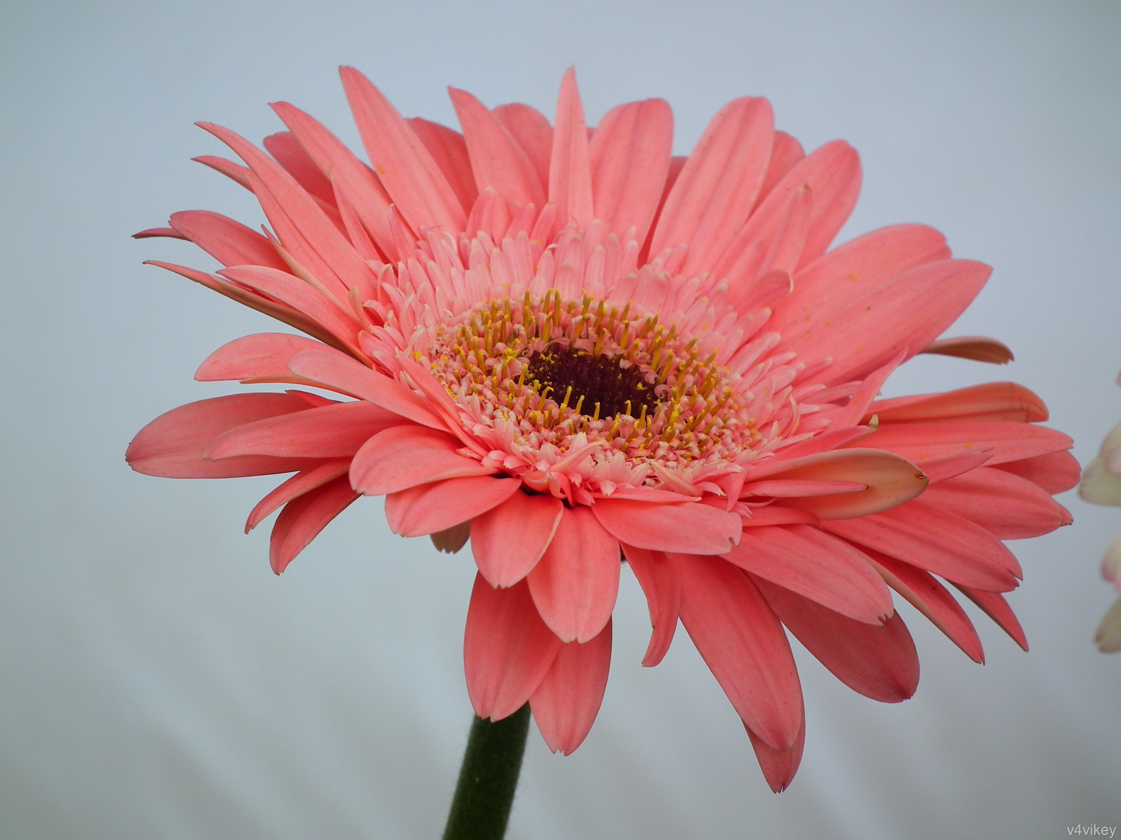 Happiness is the natural duty of Flower « Wallpaper Tadka