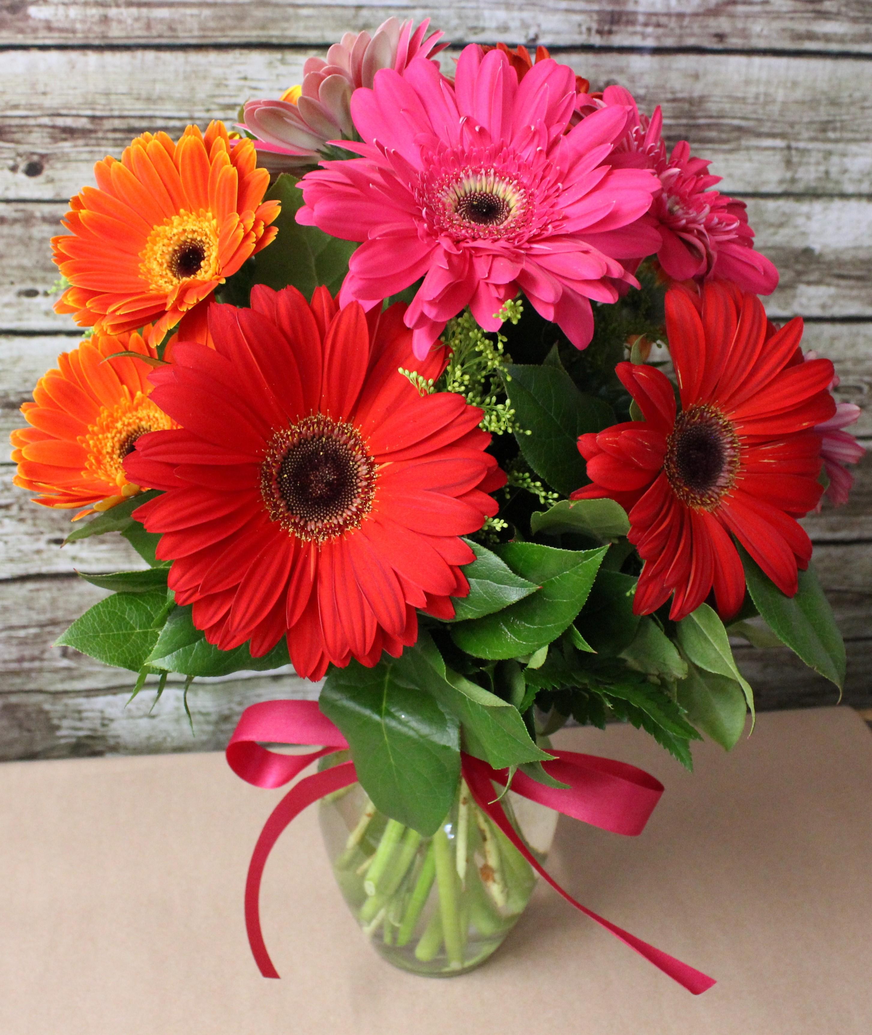 красивые цветы фото герберы этого удивительного привлекательного