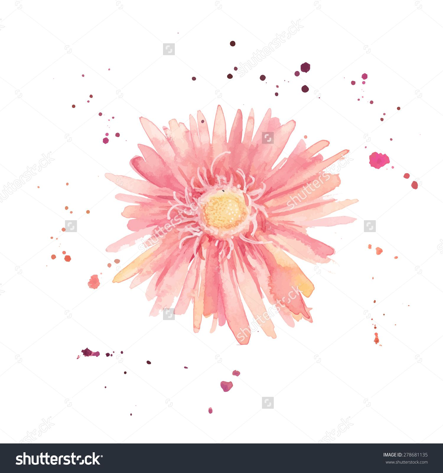 Watercolor gerbera. Single flower with paint drops and dots hand ...