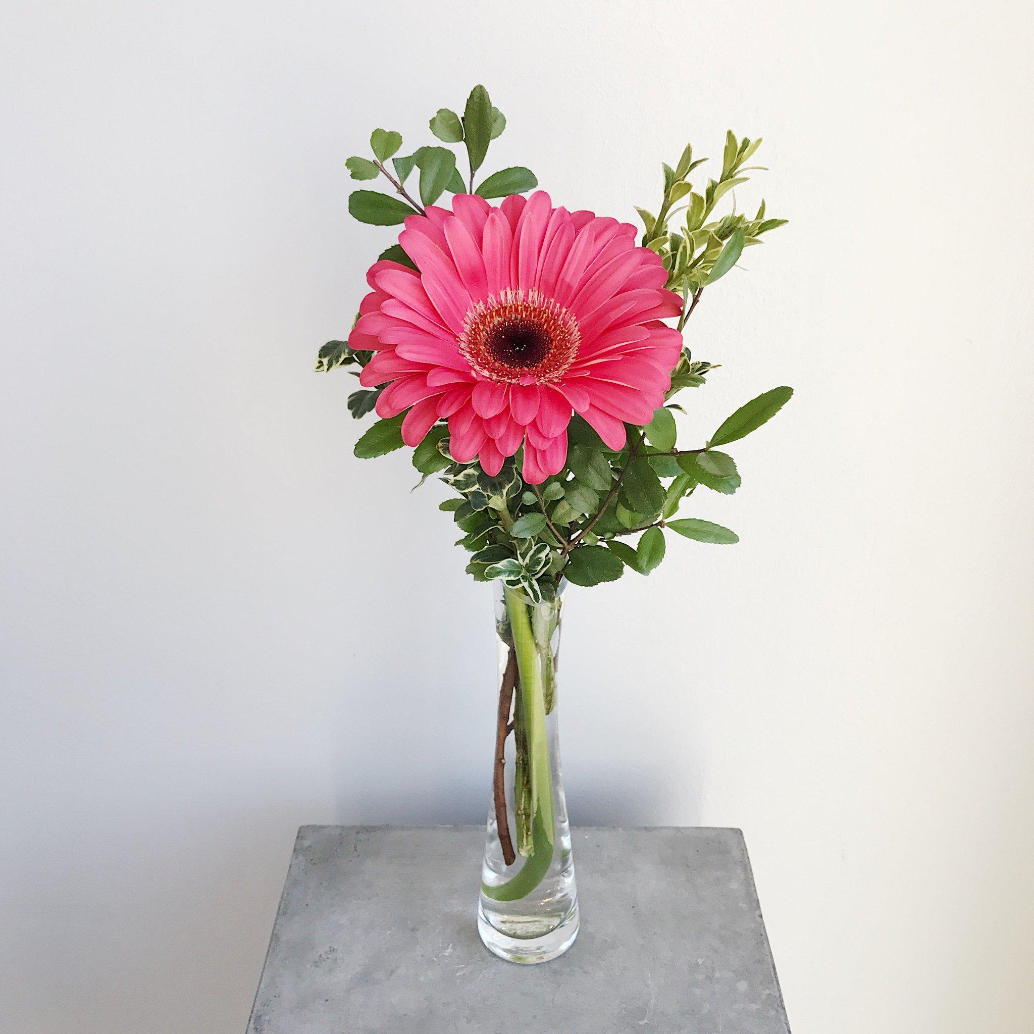 Simple Gerbera – Academy Florist