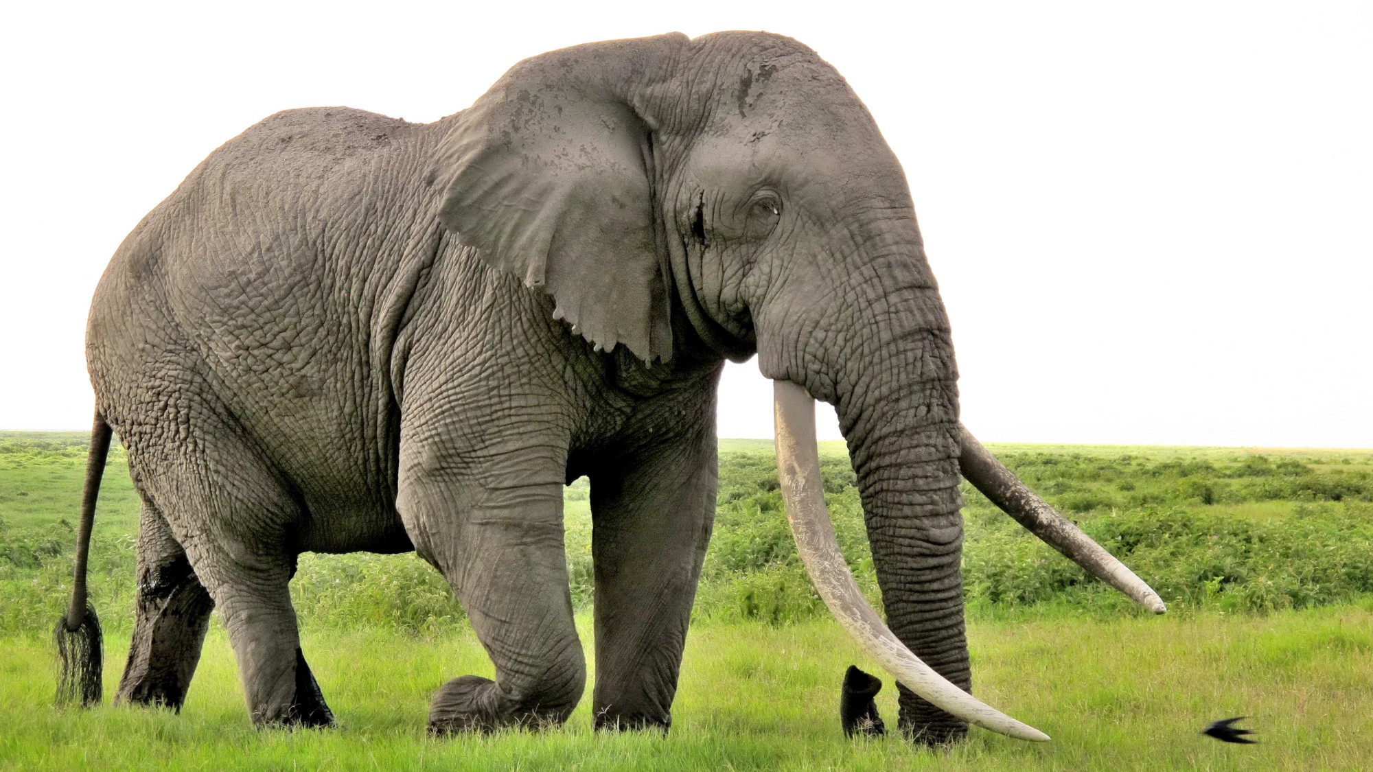 What Does It Mean That Another Giant Elephant Has Fallen?