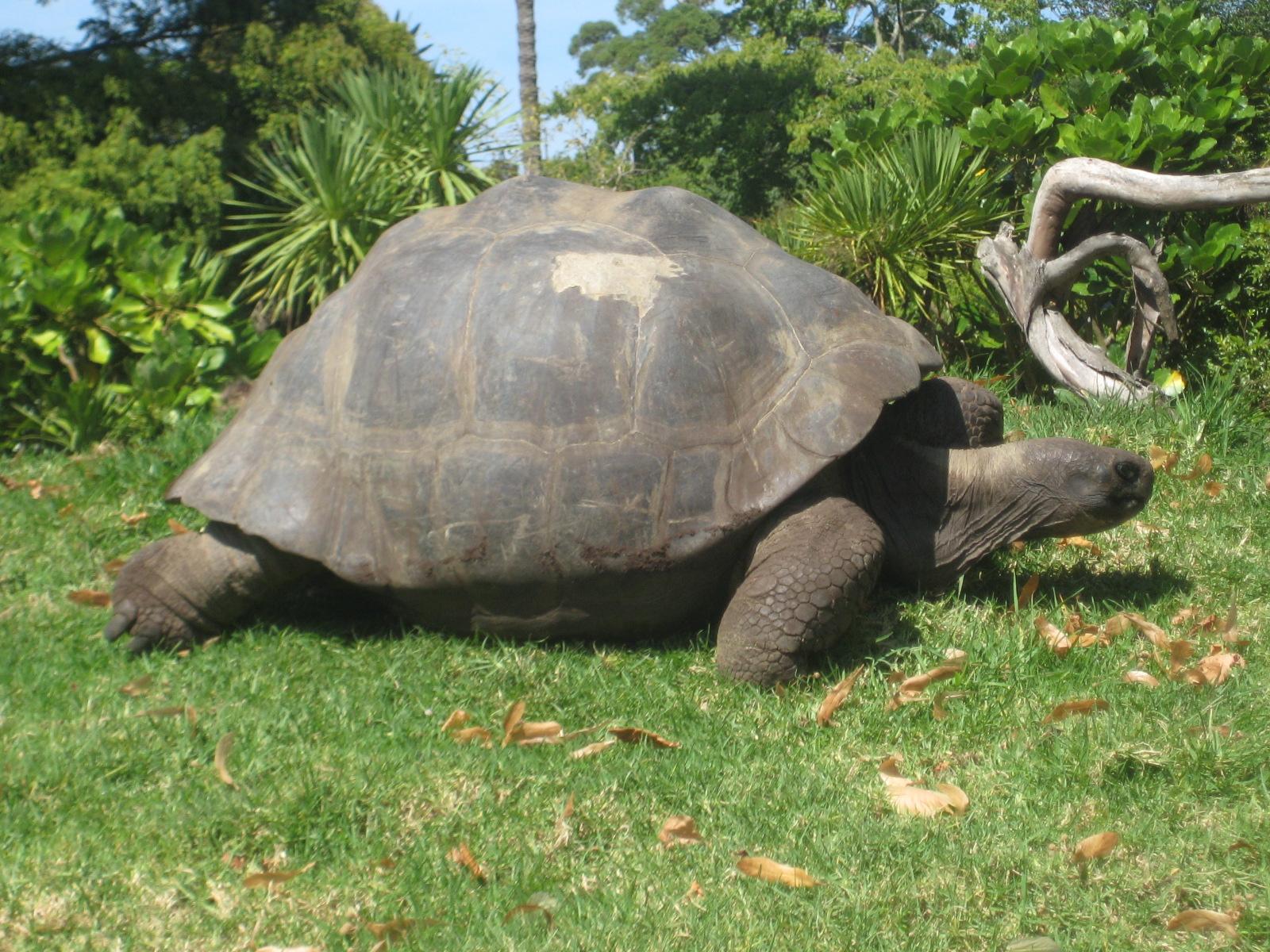Giant Turtle | Broken Luggage