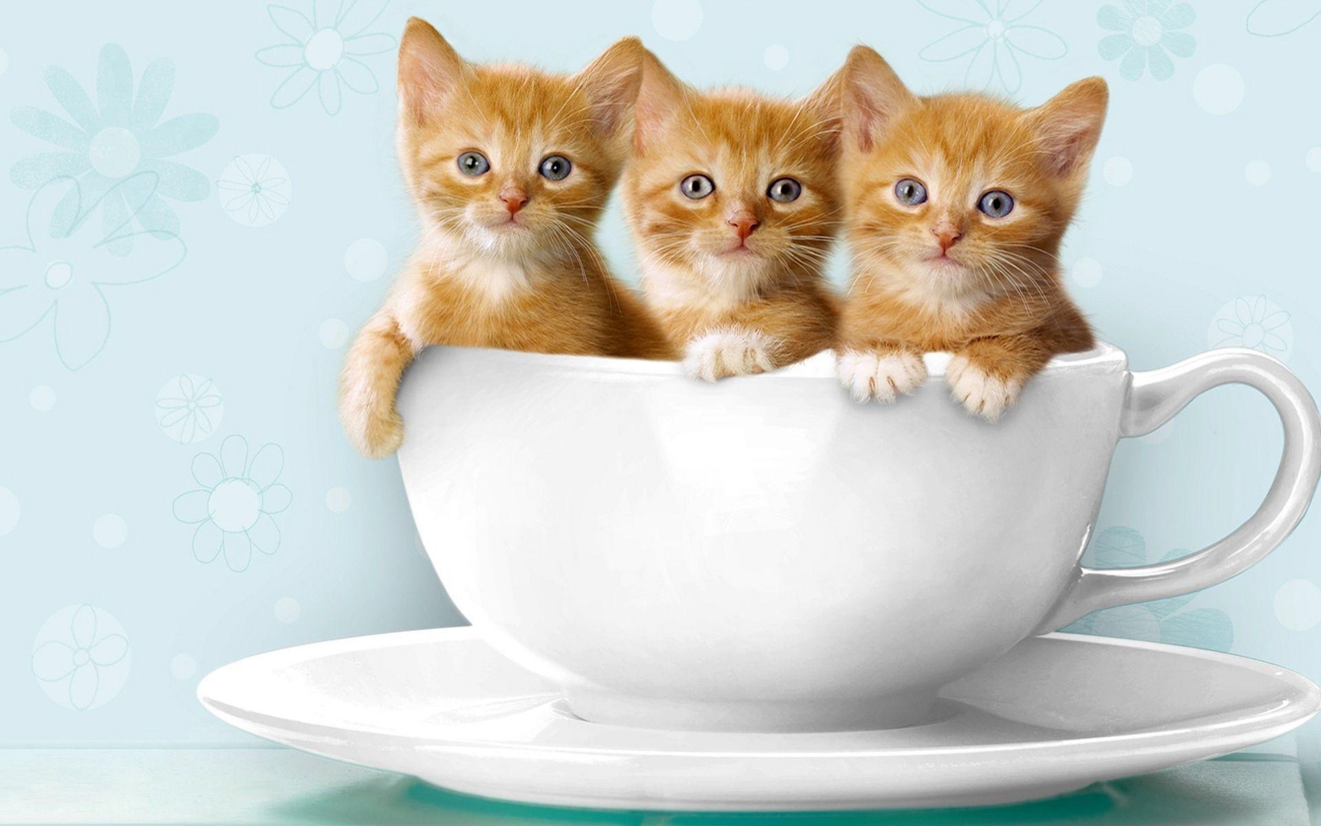 Taza, cheshire, gato, taza, humo, cheshire, gato wallpaper ...