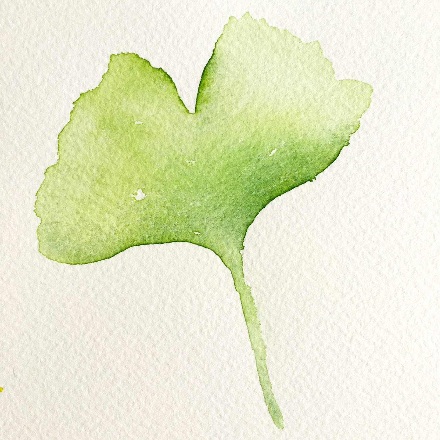 Watercolor Painting Ginkgo Biloba Leaves - YouTube