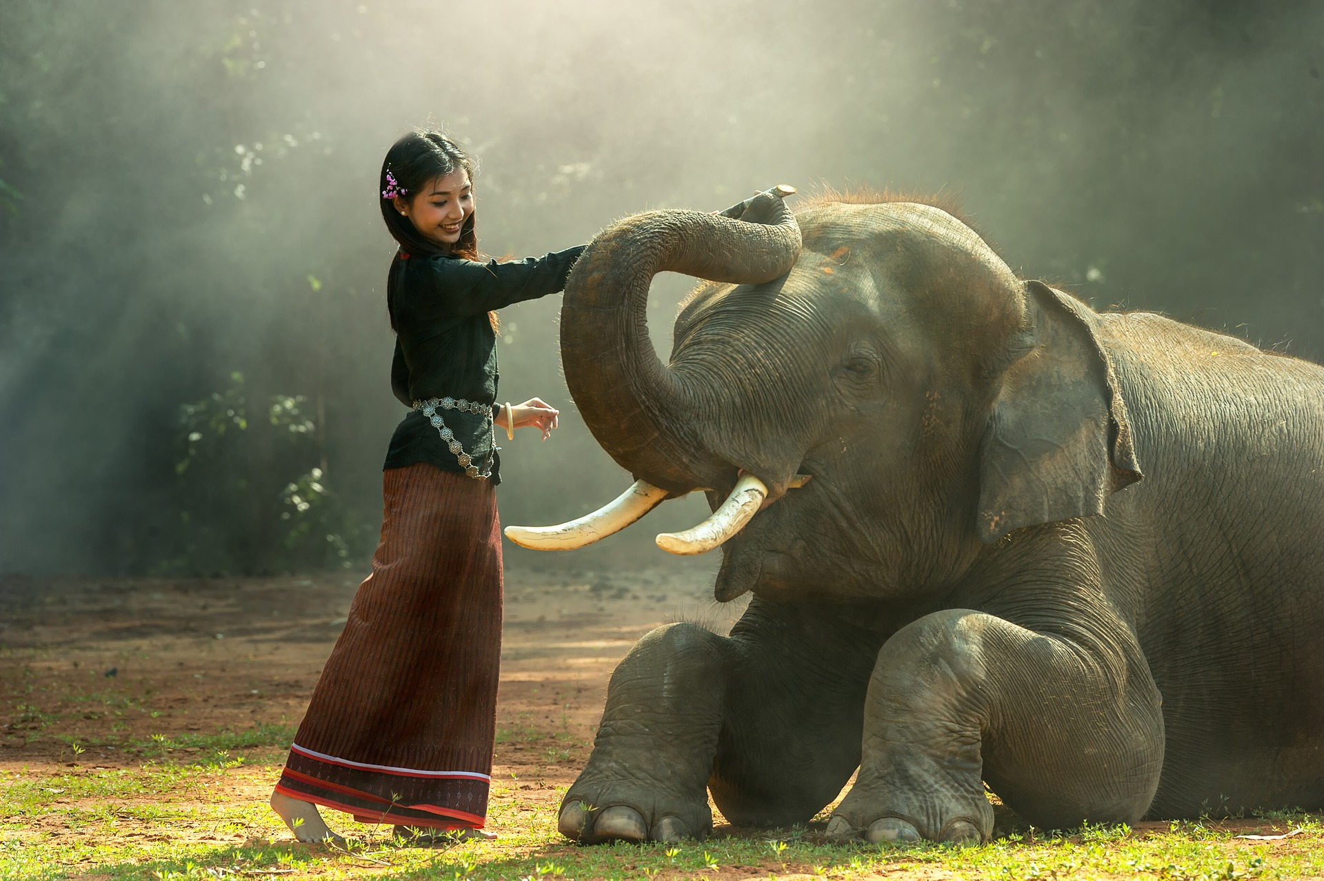 Girl With the Elephant, Activity, Elephant, Giant, Girl, HQ Photo