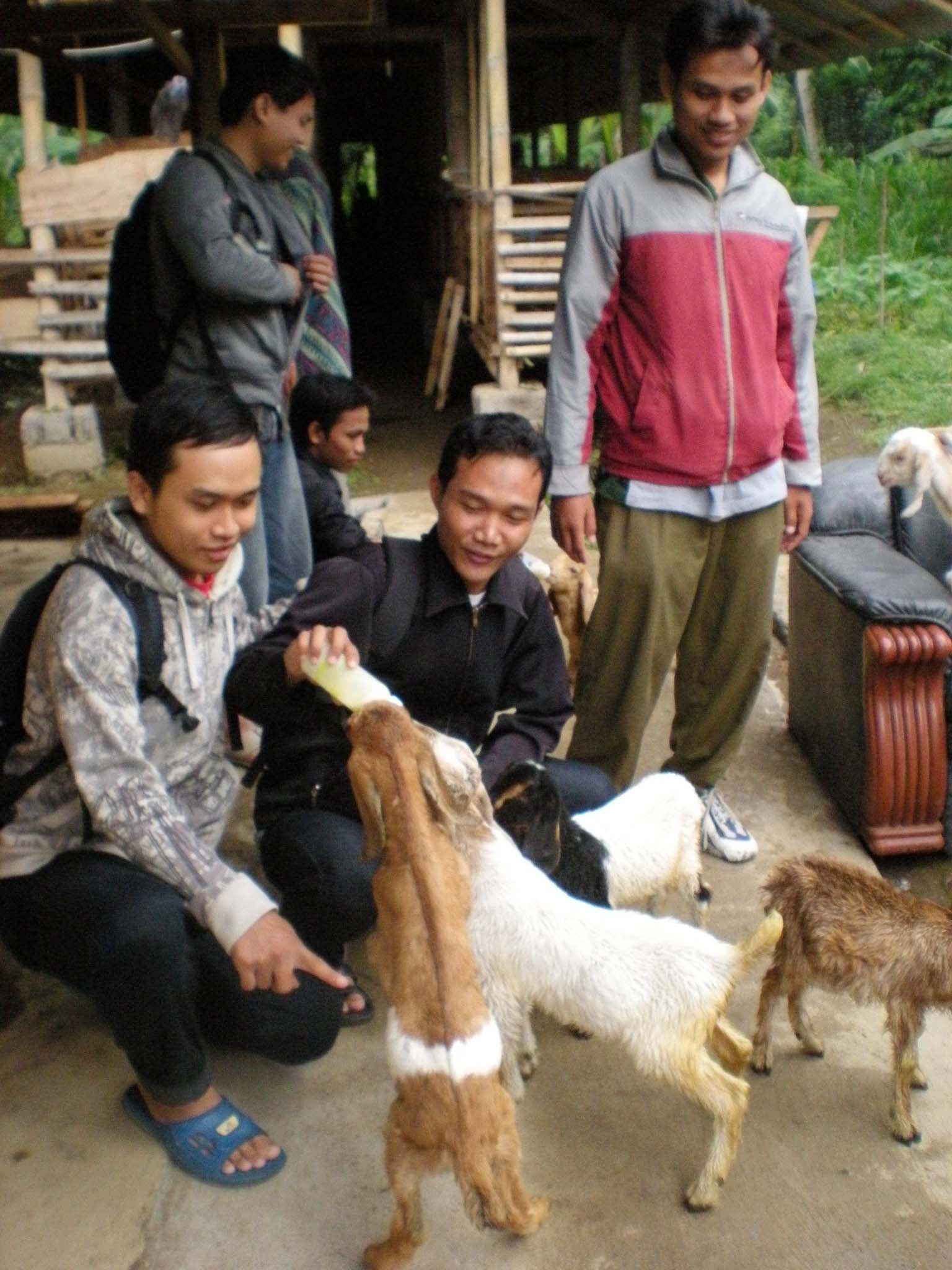 Giving Milk to Goat, People, Milk, Goat, Farm, HQ Photo