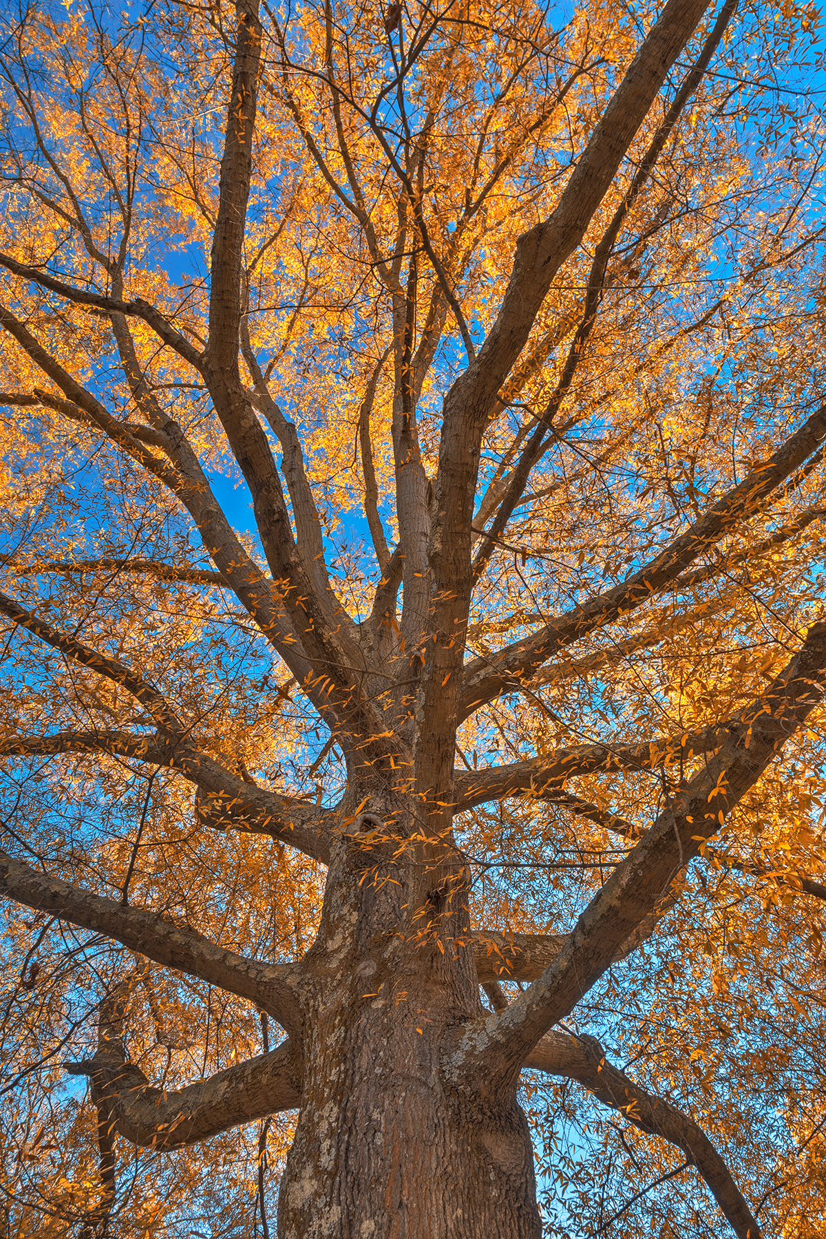 Glowing autumn tree foliage - hdr photo