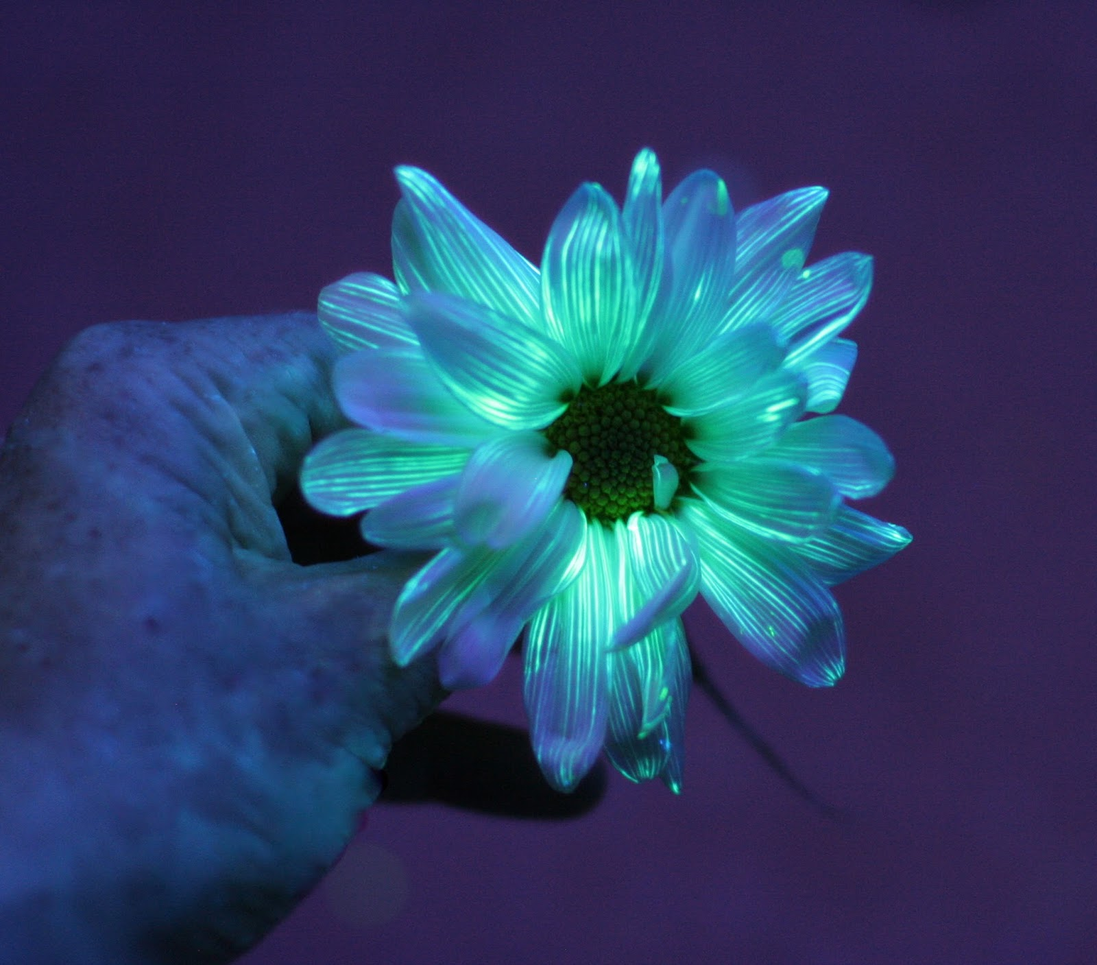 Glowing flower photo