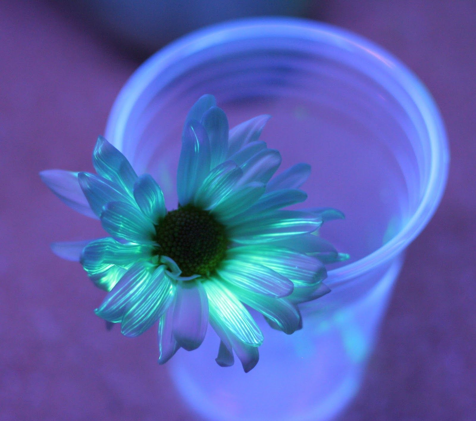 Flower Science Experiment for Kids: DIY Glowing Flowers | Glowing ...