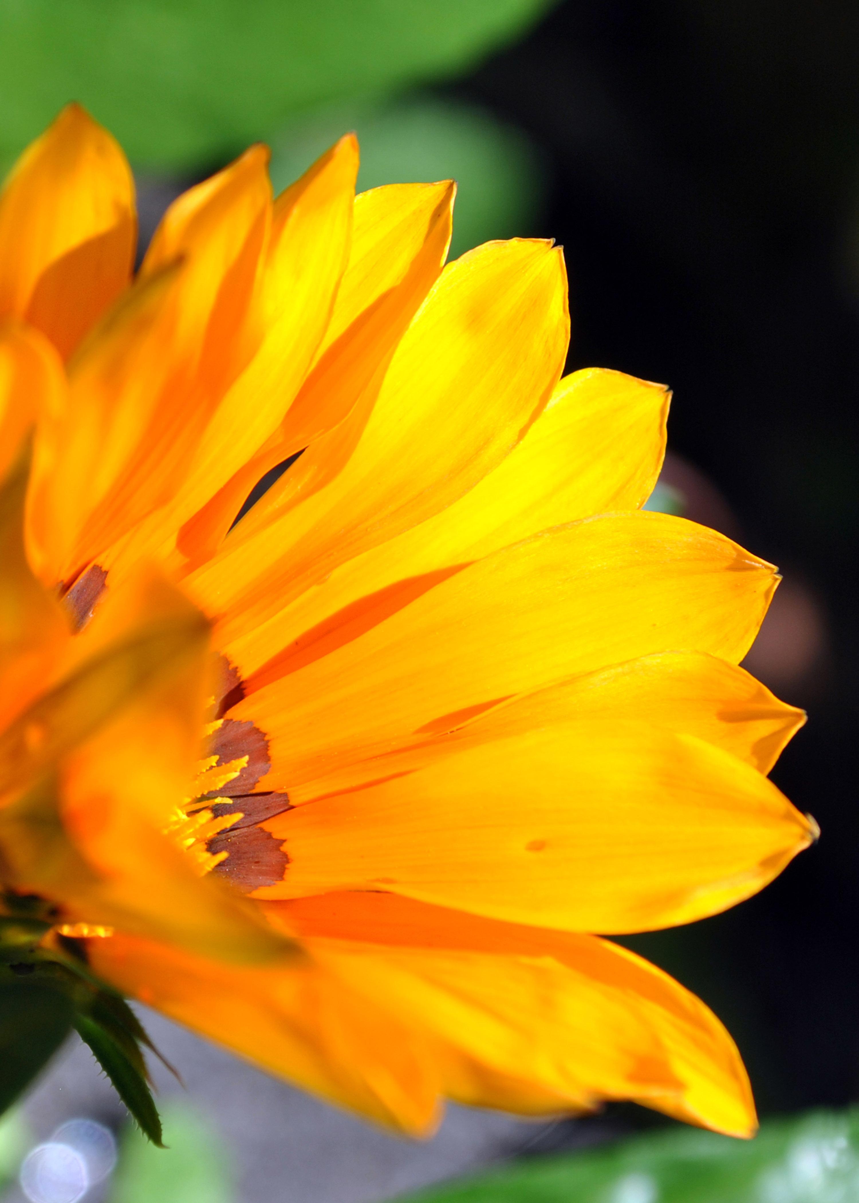 Glowing Flower, Summerflowers, Flowerprint, Springsflowers, Poster, HQ Photo