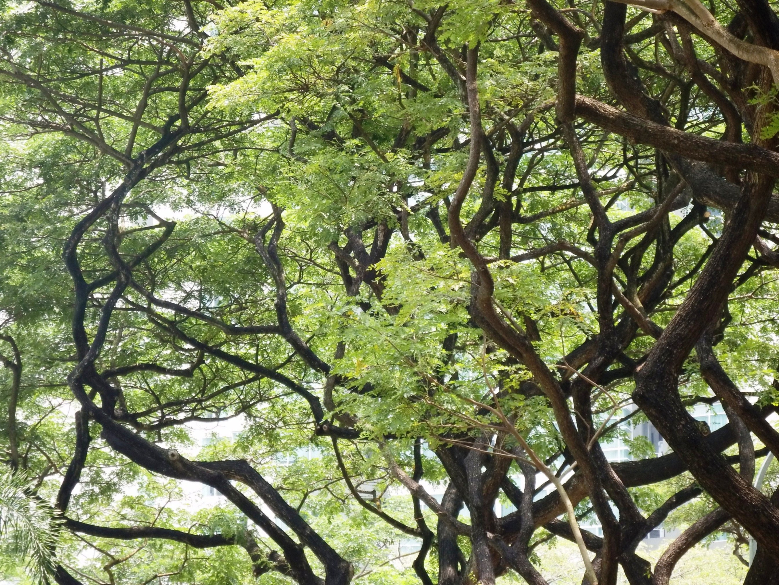Free photo: Gnarled Trees - plant, solitary, park - Non-Commercial ...