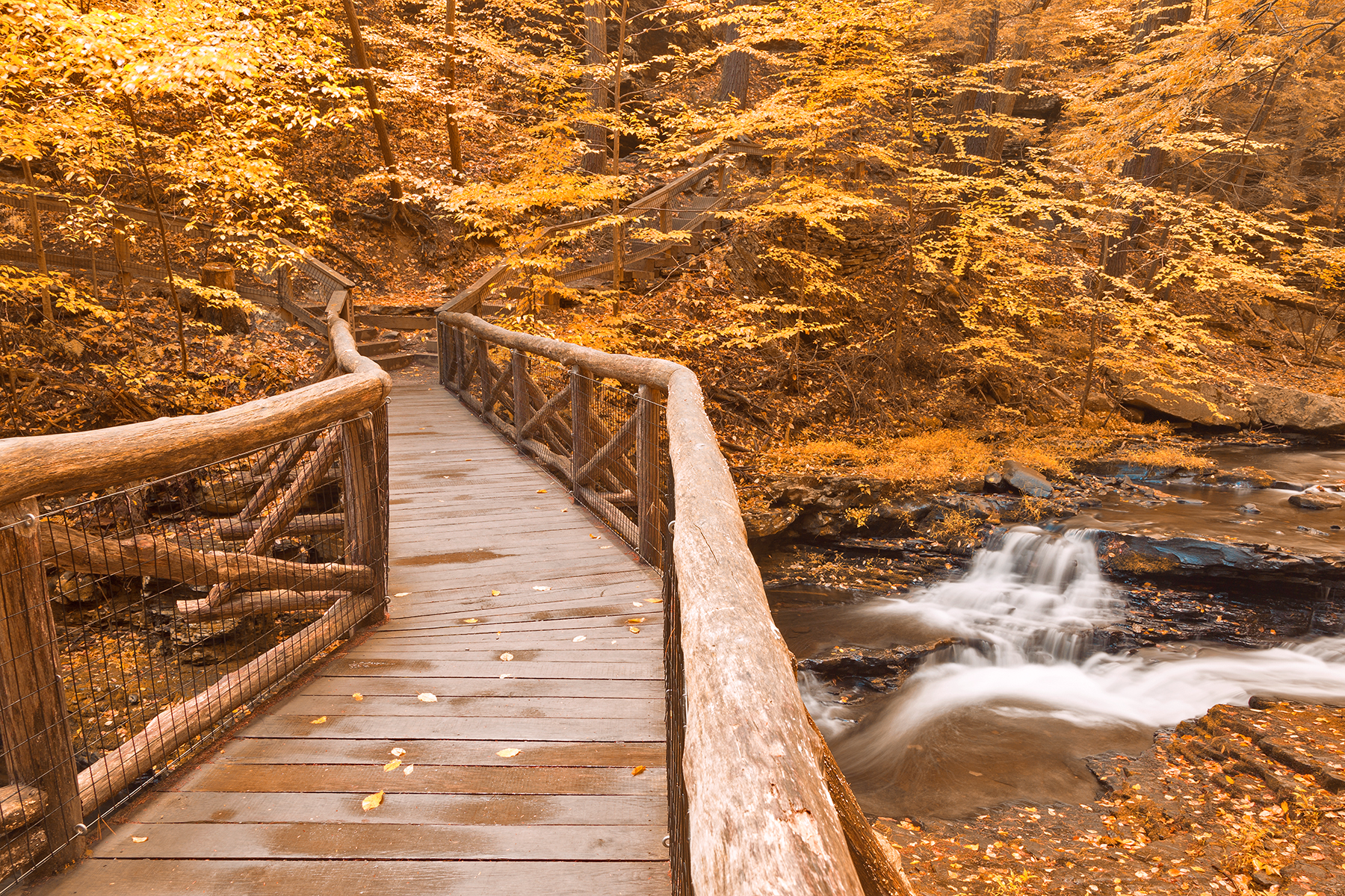 Gold Autumn Boardwalk Bridge, Adventure, Recreational, Stairs, Staircase, HQ Photo