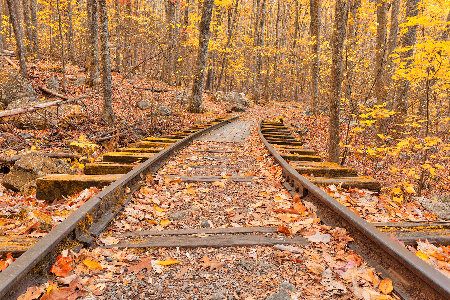 Gold autumn logging railroad - hdr photo