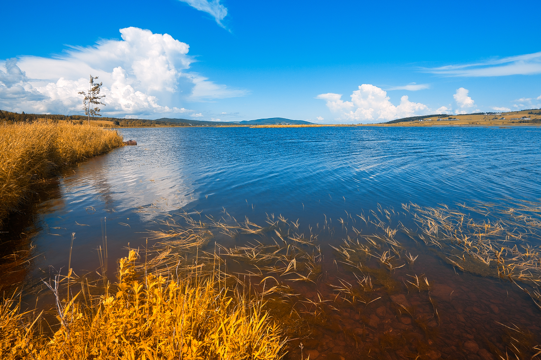 Gold beaver brook - hdr photo